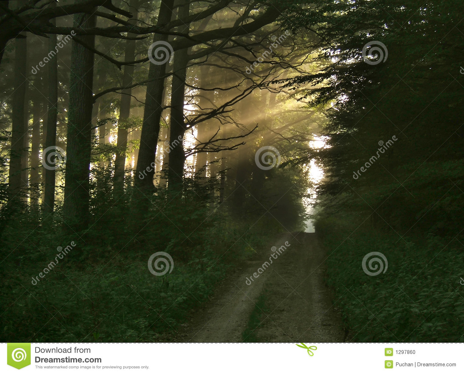 δασικό φως ακτίνων