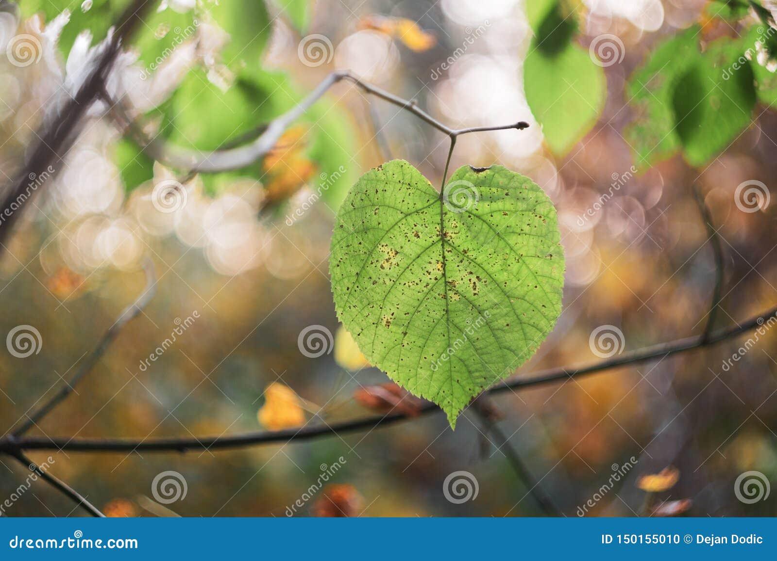 Δασικό φύλλωμα φύλλων δέντρων το φθινόπωρο
