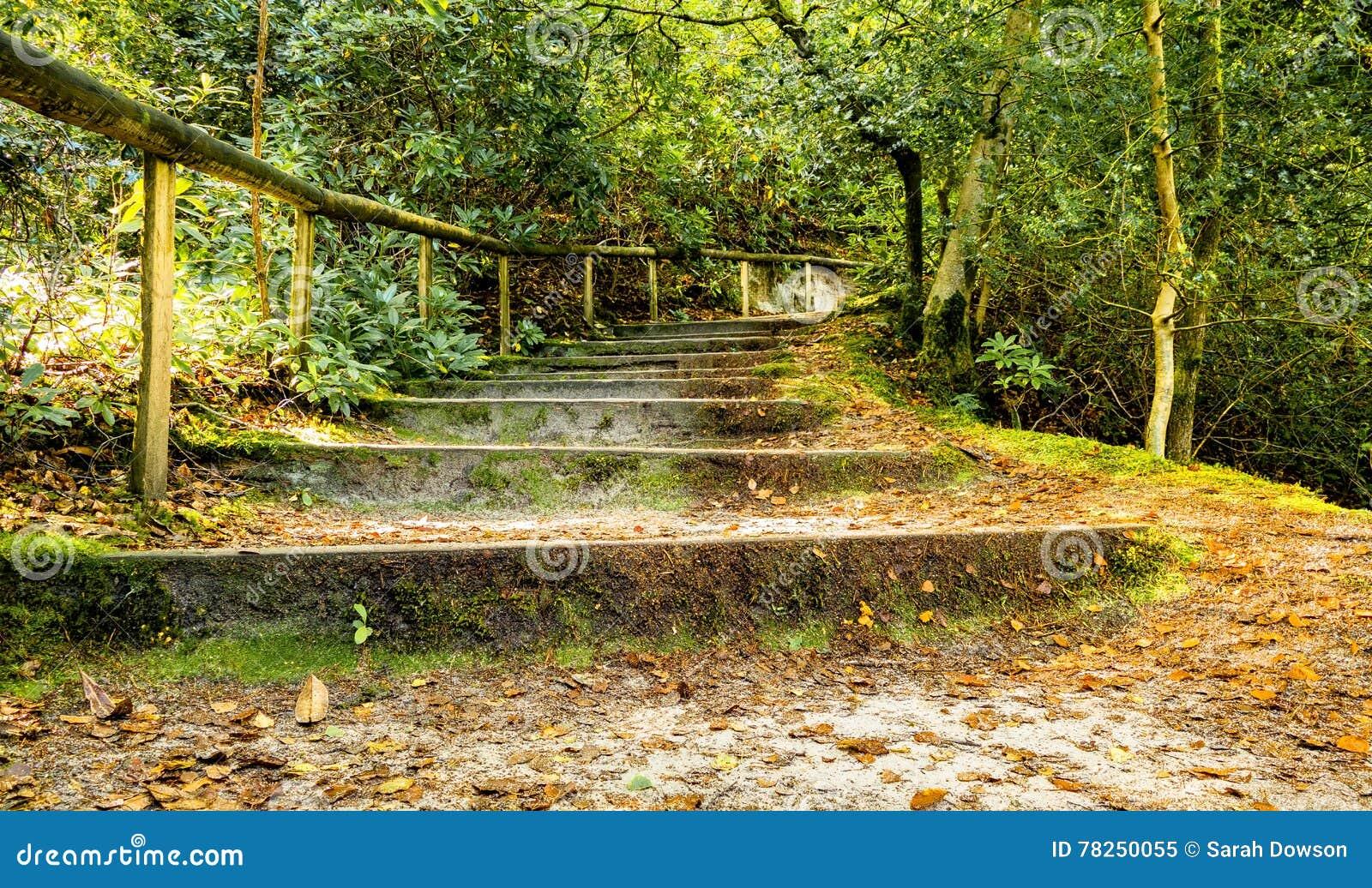 Δασόβια πορεία και βήματα