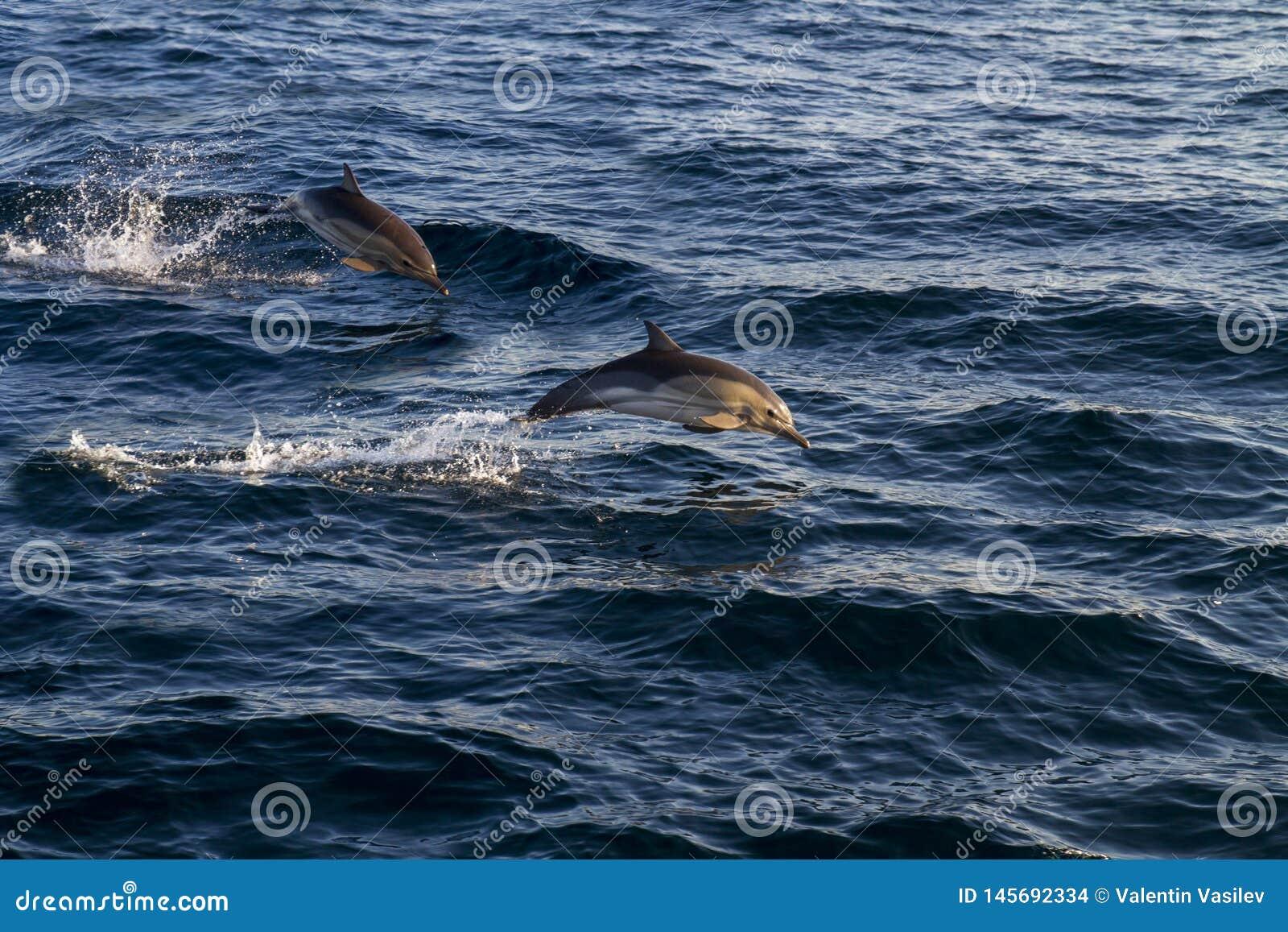Δελφίνια που πηδούν πέρα από τα κύματα