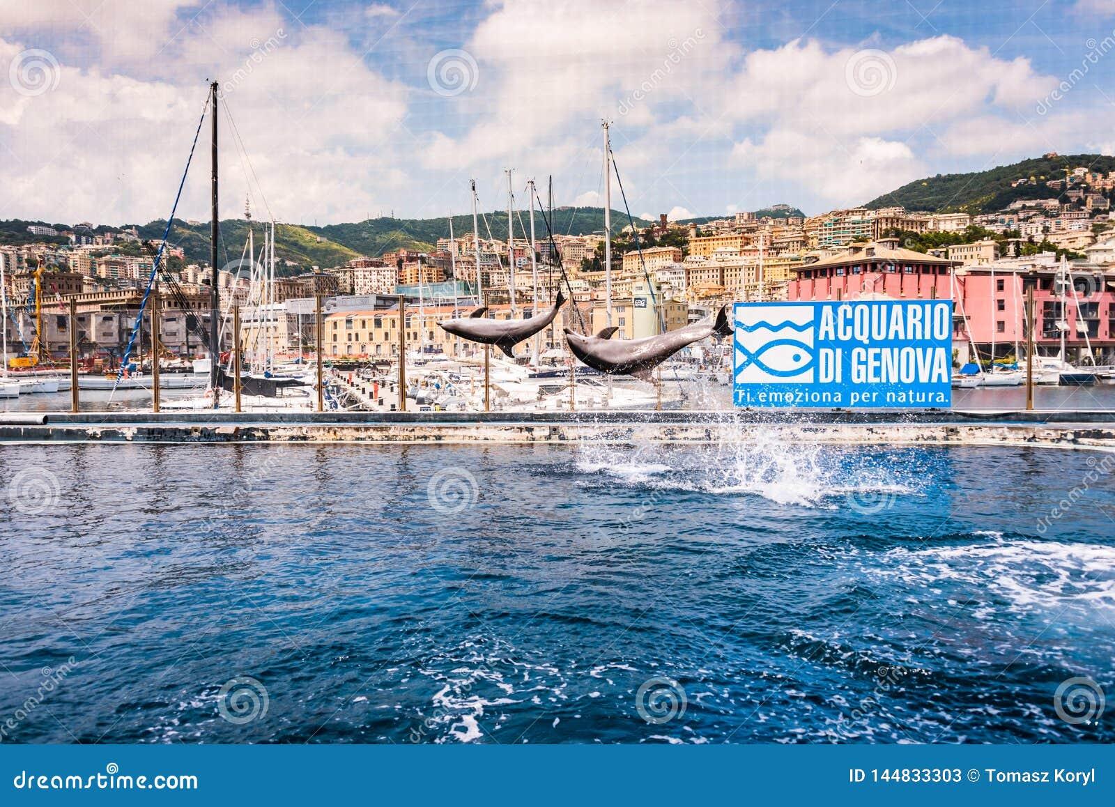 Δελφίνια που πηδούν στο μεγαλύτερο ενυδρείο στην Ευρώπη