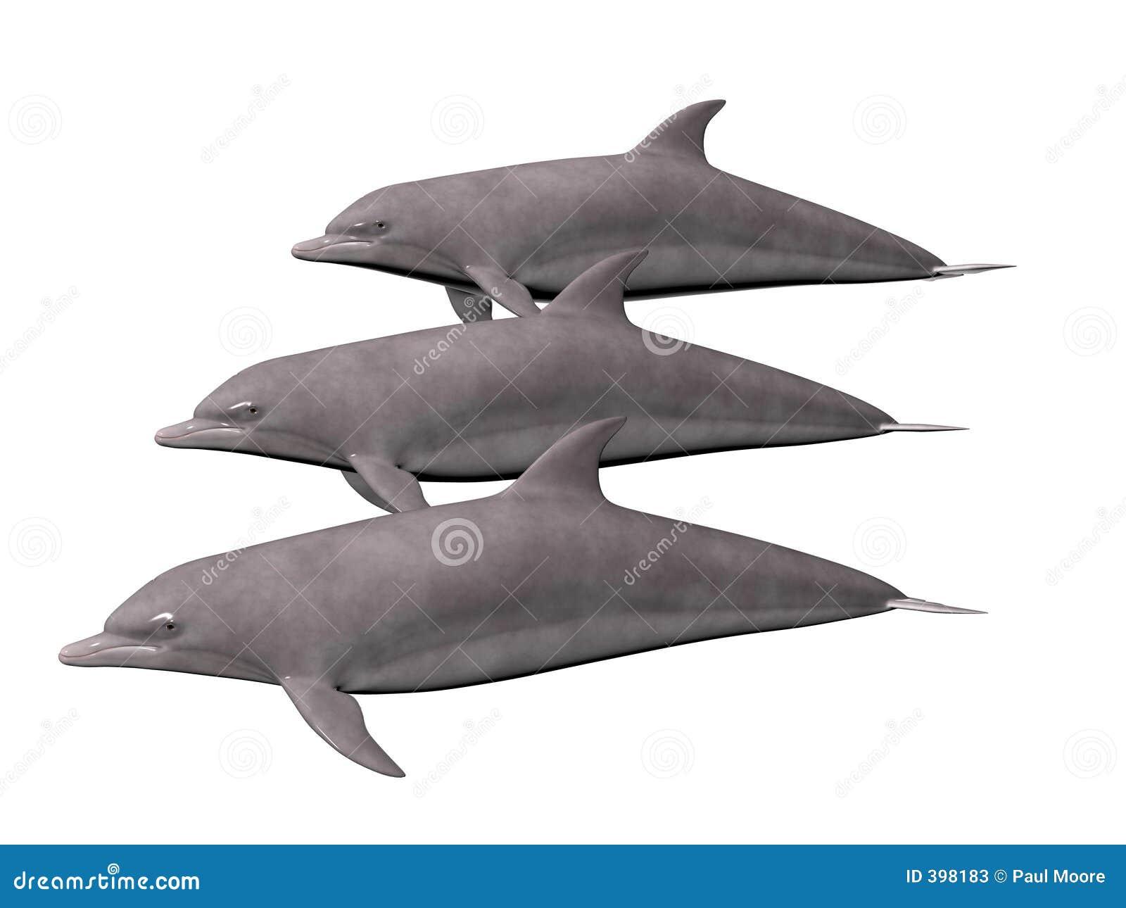 δελφίνια τρία