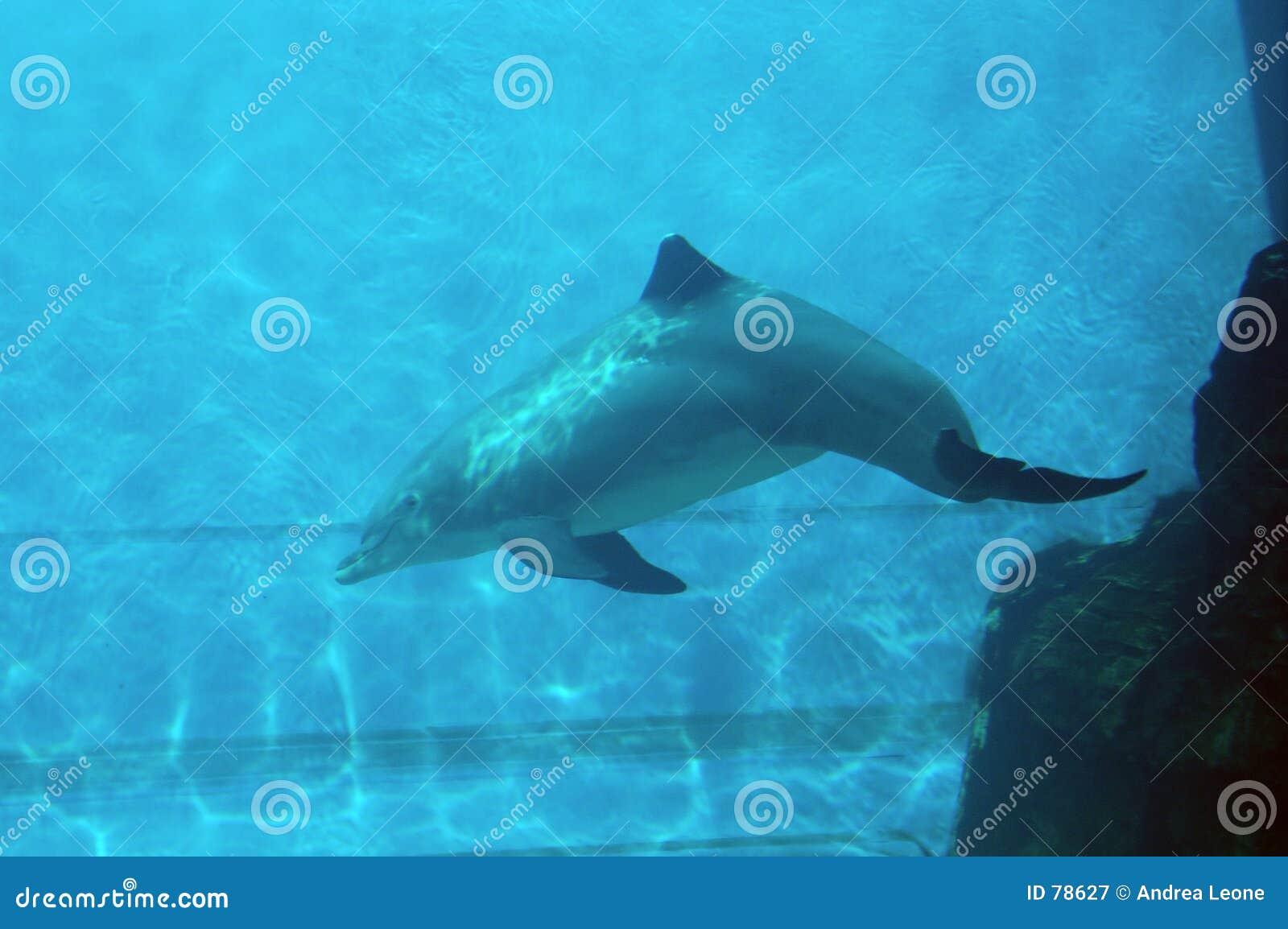 δελφίνι ι