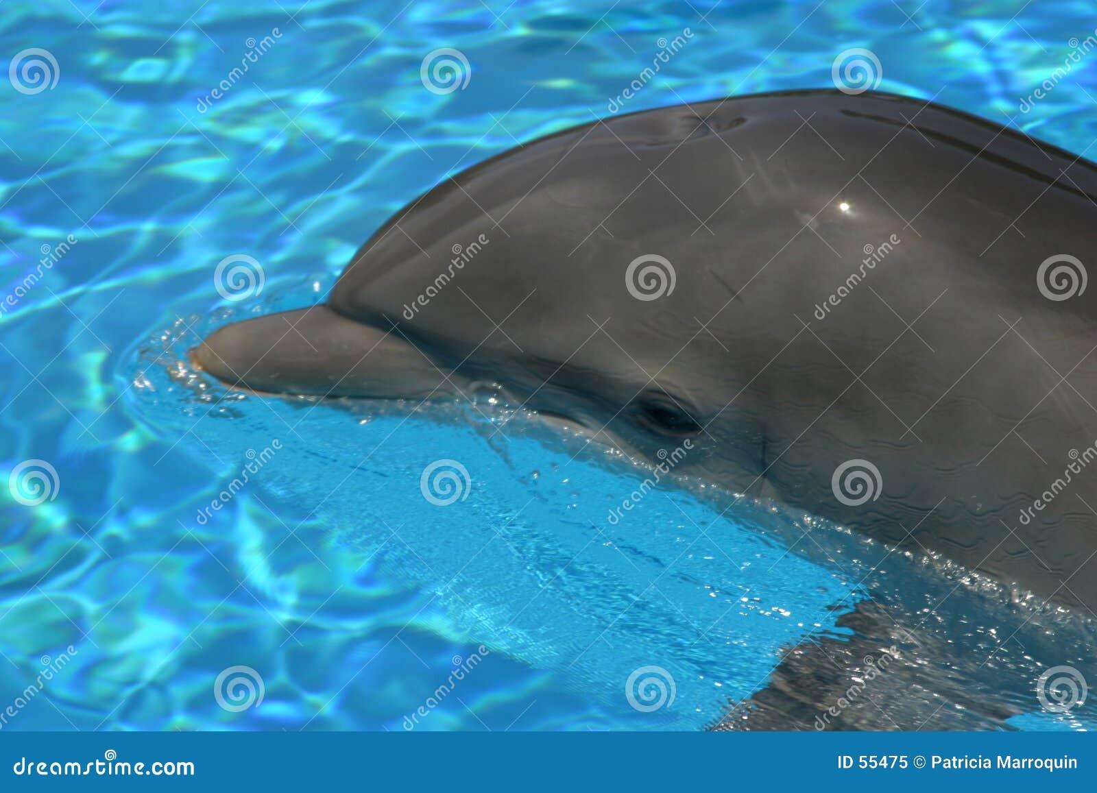 Download δελφίνι ομορφιάς στοκ εικόνα. εικόνα από χαμόγελο, πτερύγιο - 55475