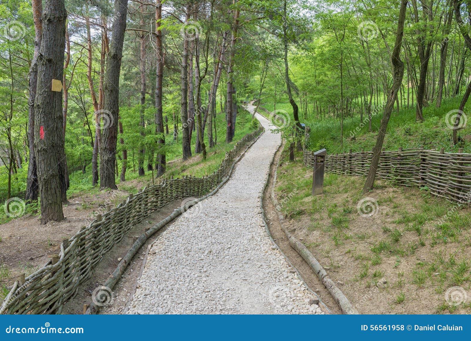Download Διάβαση που χτίζεται των μικρών πετρών στο δάσος Στοκ Εικόνες - εικόνα από μονοπάτι, ταξίδι: 56561958