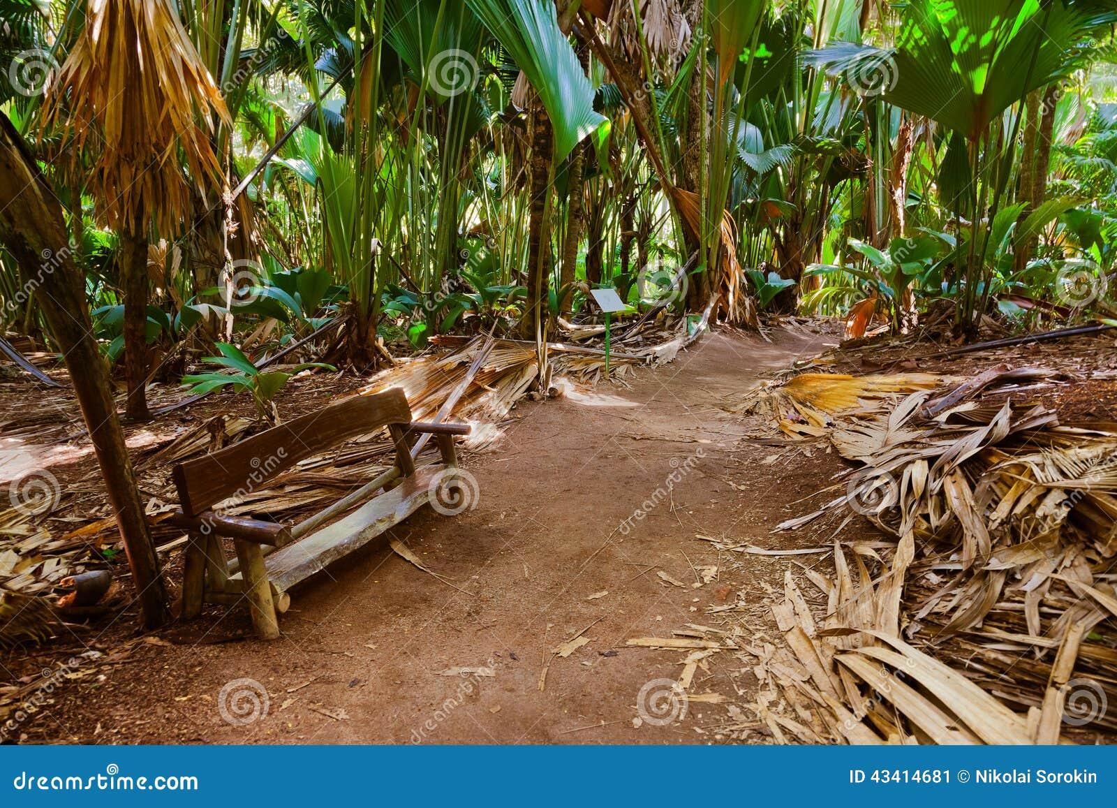 Διάβαση στη ζούγκλα - Vallee de Mai - Σεϋχέλλες