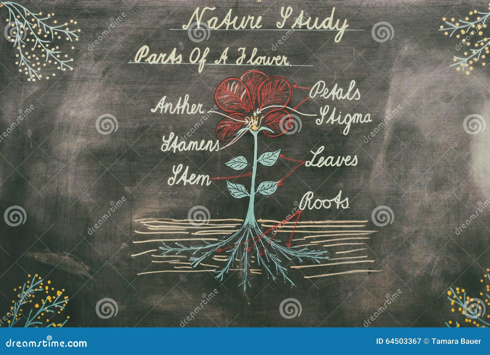 Διάγραμμα της φύσης στον πίνακα κιμωλίας