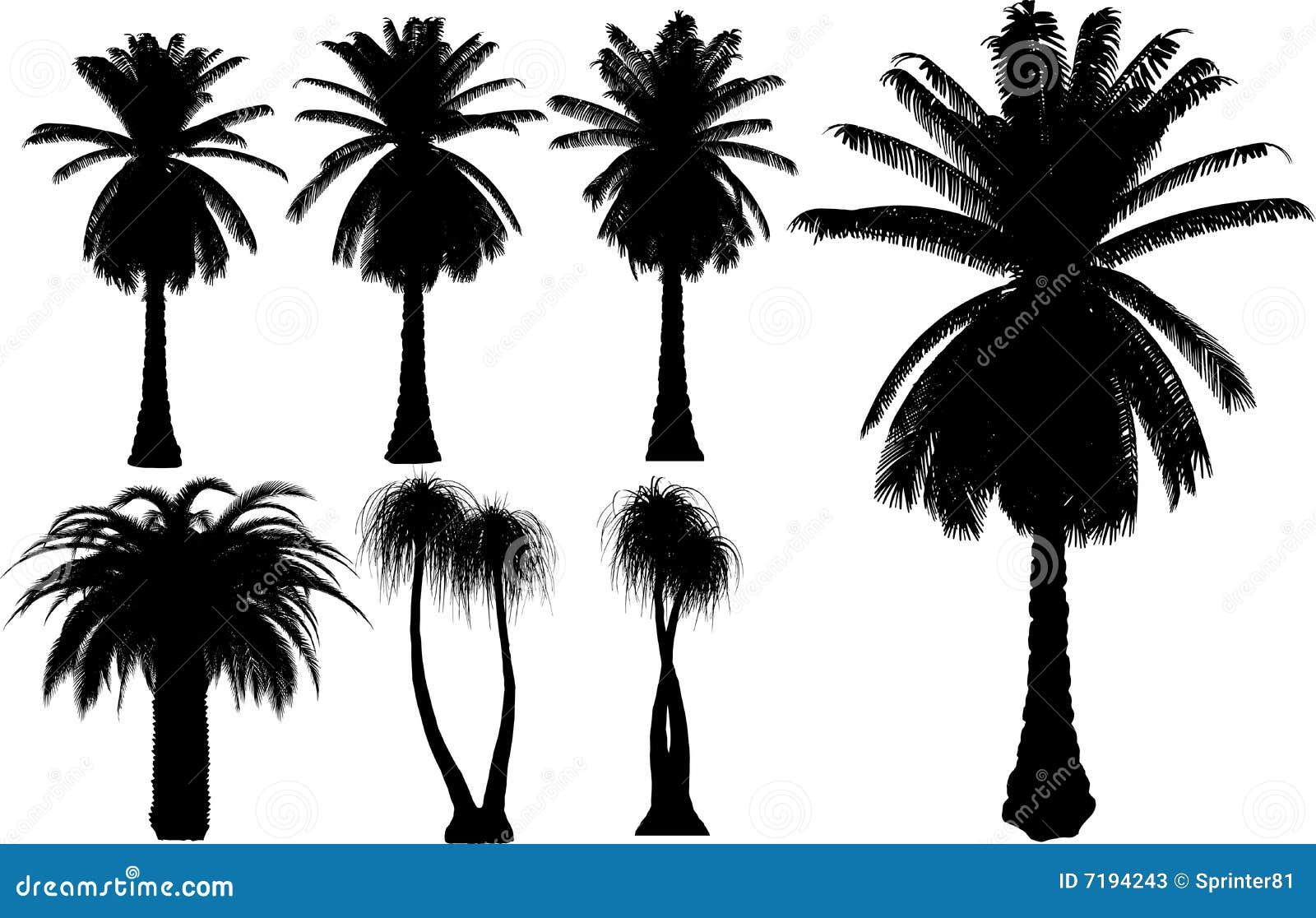 διάνυσμα δέντρων φοινικών