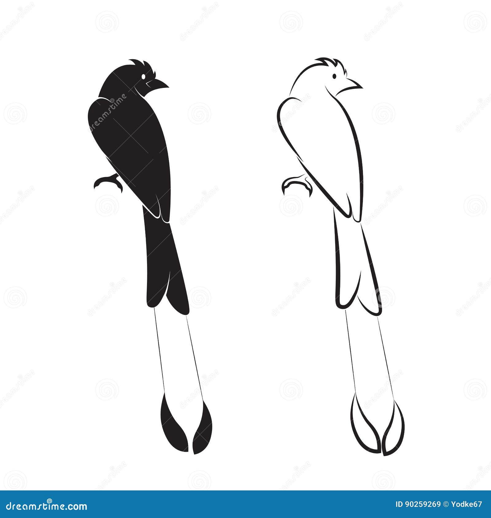 το μεγαλύτερο πουλί μαύρο