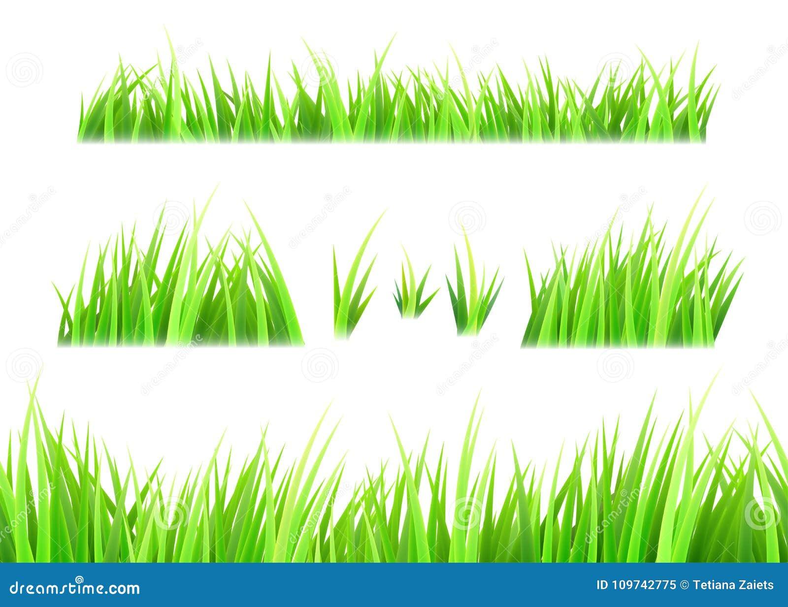Διάνυσμα χλόης που απομονώνεται στο άσπρο υπόβαθρο Τούφες της χλόης Πράσινο σύνολο θερινών χορτοταπήτων