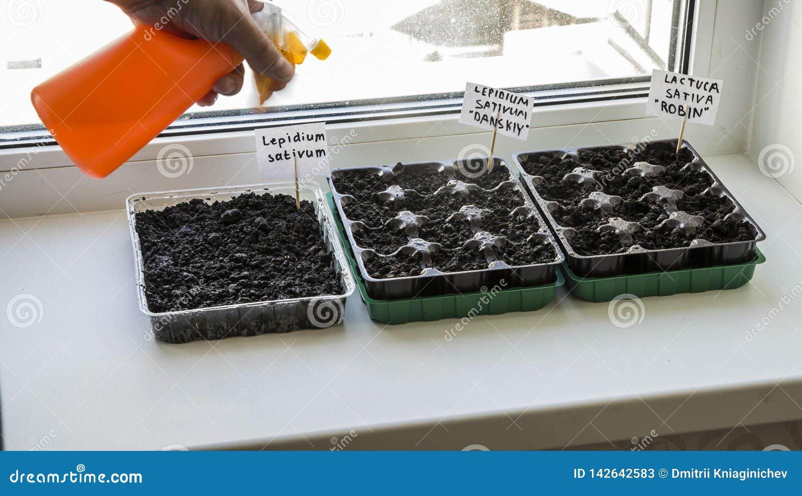 Διάφορα πλαστικά εμπορευματοκιβώτια με το χώμα κήπων Φυτευμένη σπορόφυτο-εικόνα