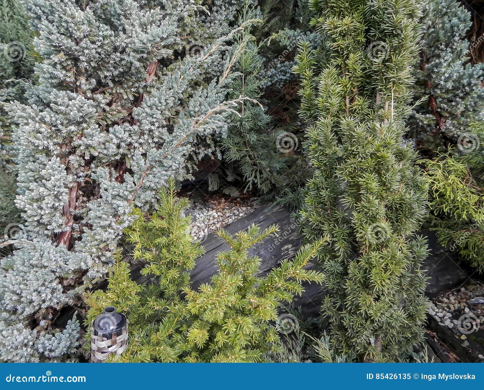 Διάφοροι πράσινοι και κωνοφόροι θάμνοι
