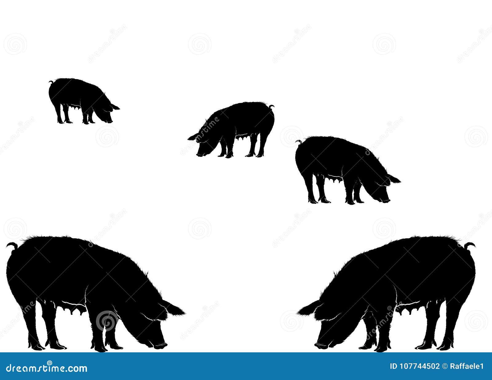 Διάφοροι χοίροι που τρώνε το διάνυσμα