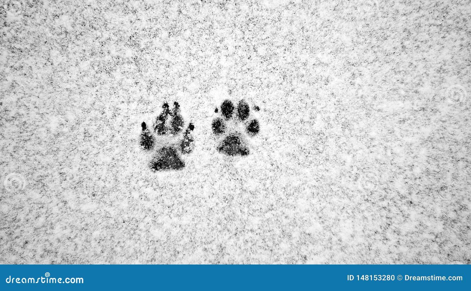 Διαδρομές σκυλιών στο χιόνι