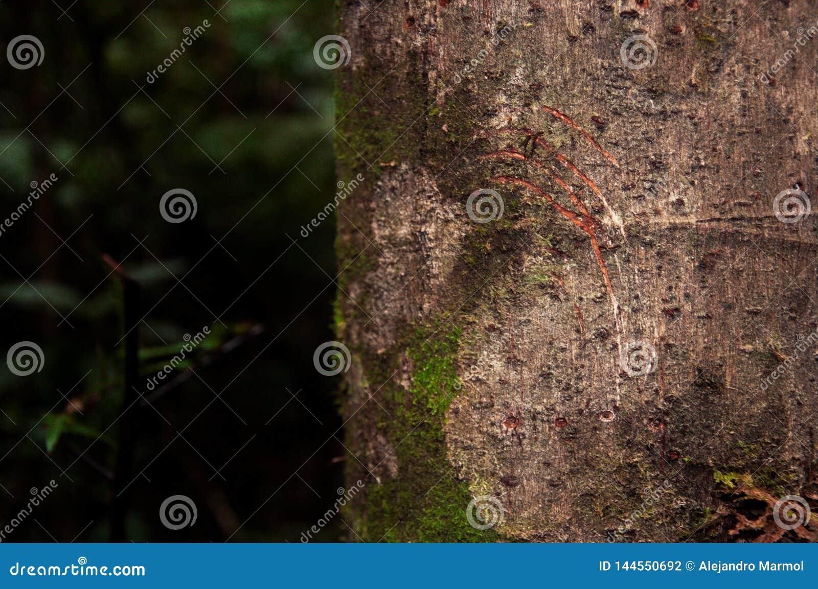 Διαδρομές στο δέντρο