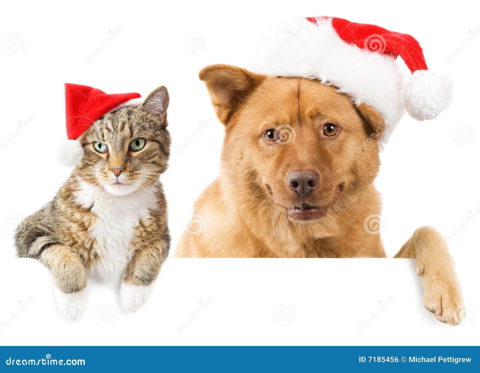 διακοπές σκυλιών γατών ε&mu