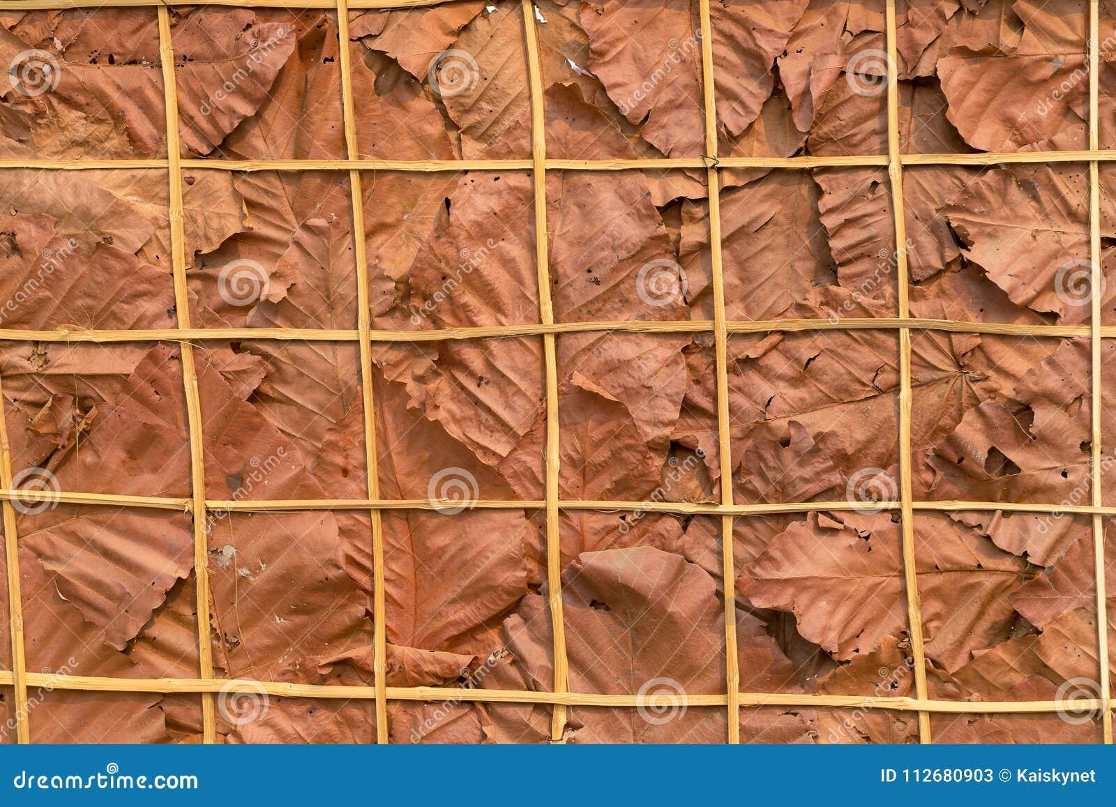 Διακοσμήστε τους τοίχους με τα ξηρά φύλλα και το υπόβαθρο