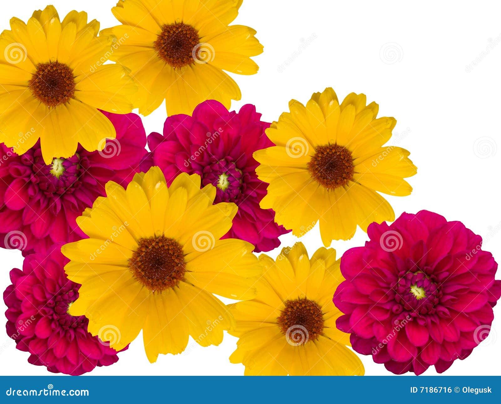 διακοσμητικά λουλούδι&