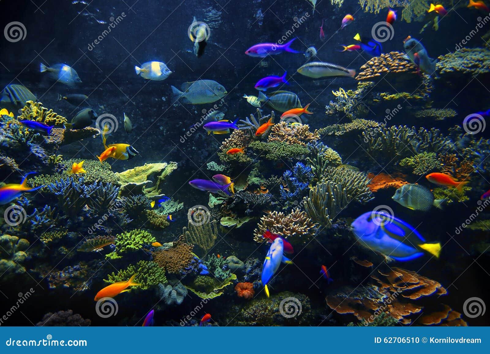 Διακοσμητικά ψάρια ενυδρείων