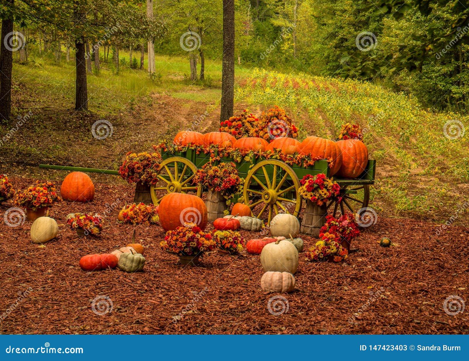 Διακοσμητική αγροτική επίδειξη κολοκύθας το φθινόπωρο