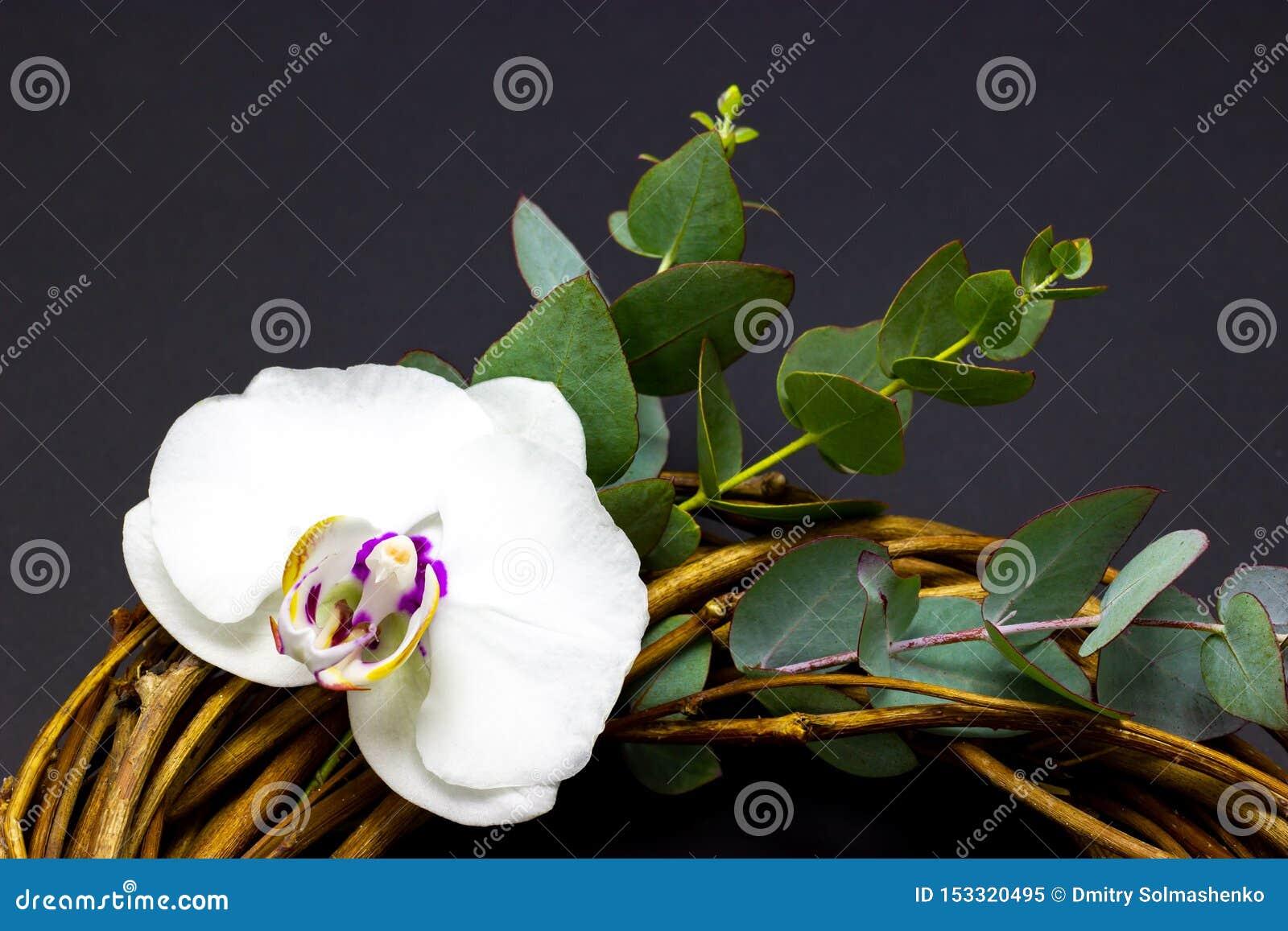 Διακοσμητικό στρογγυλό στεφάνι με τα λουλούδια ορχιδεών και ευκάλυπτος σε ένα σκοτεινό υπόβαθρο