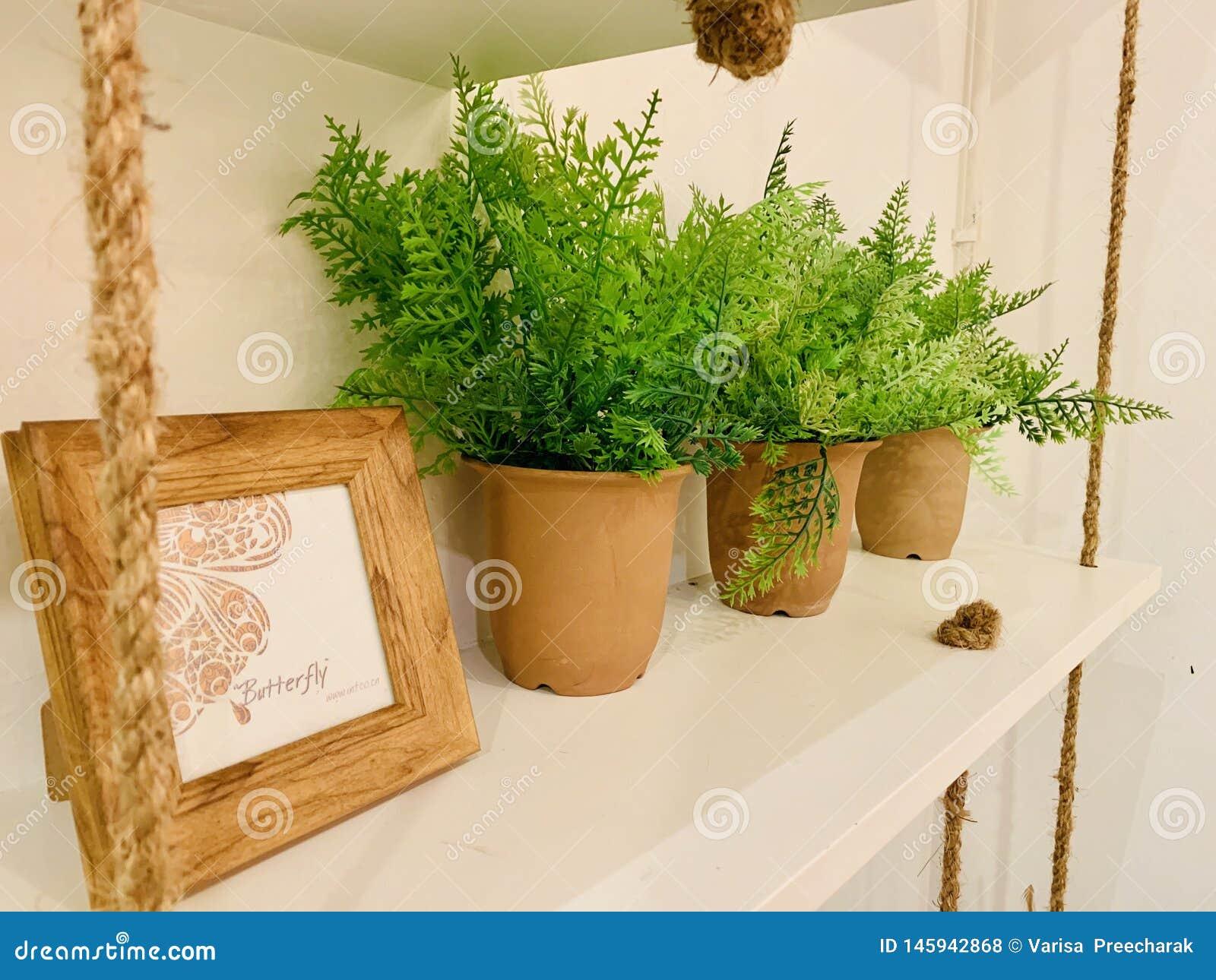 Διακόσμηση, εκλεκτής ποιότητας, ξύλινη, σχοινί, δοχείο εγκαταστάσεων, εικόνα