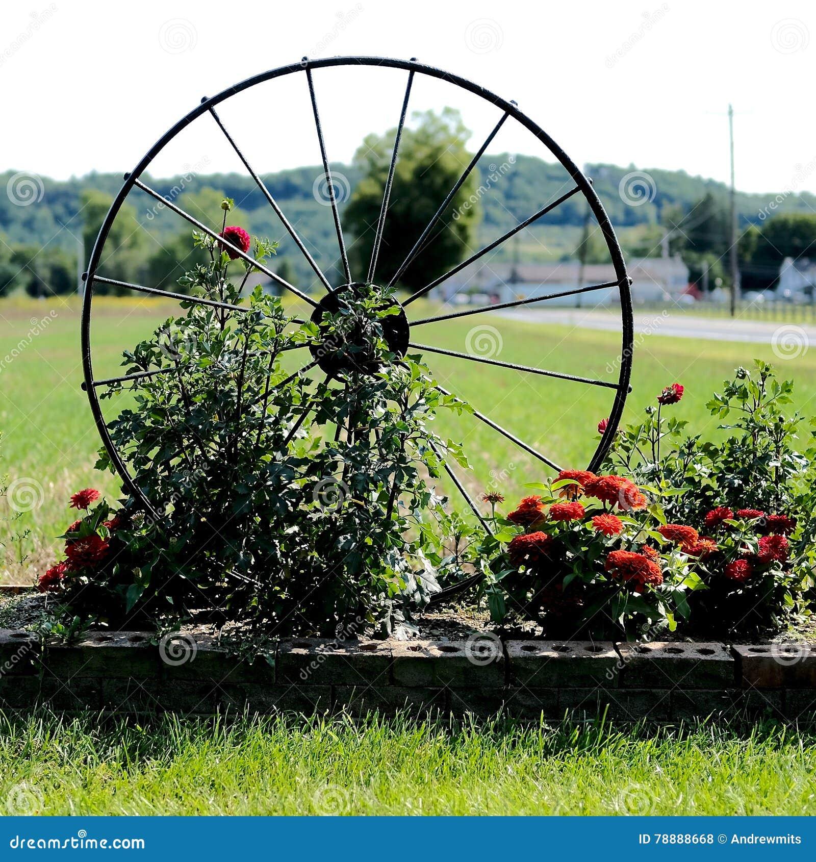 Διακόσμηση κήπων ροδών Spoked