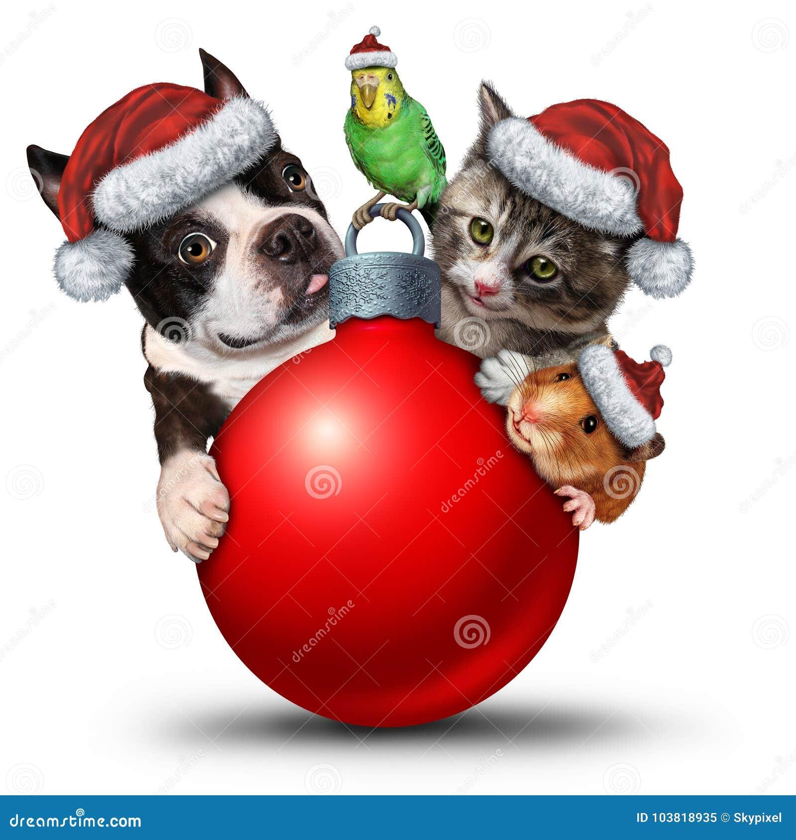 Διακόσμηση κατοικίδιων ζώων Χριστουγέννων