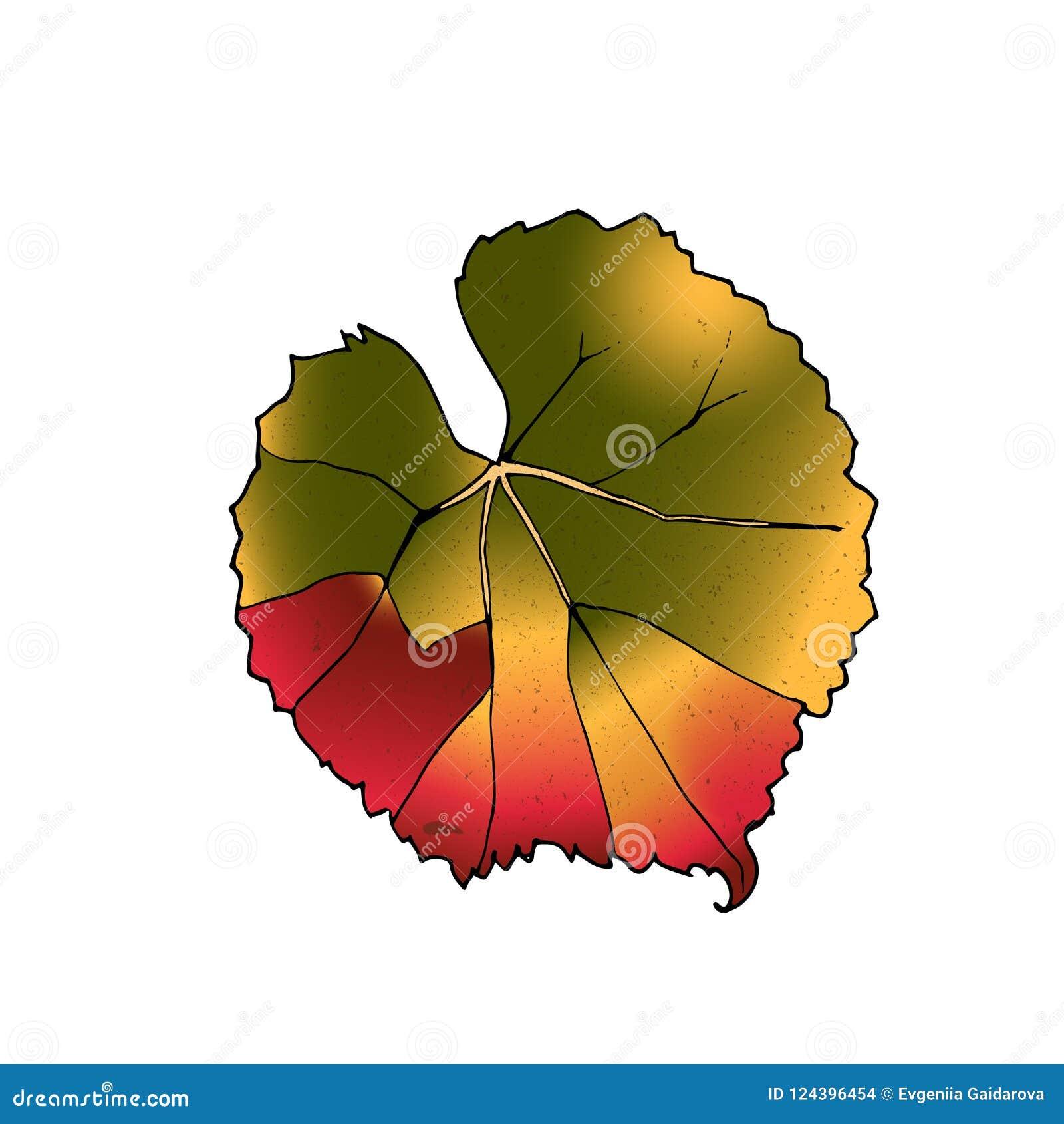 Διανυσματικά φύλλα κρασιού που απομονώνονται στο άσπρο υπόβαθρο