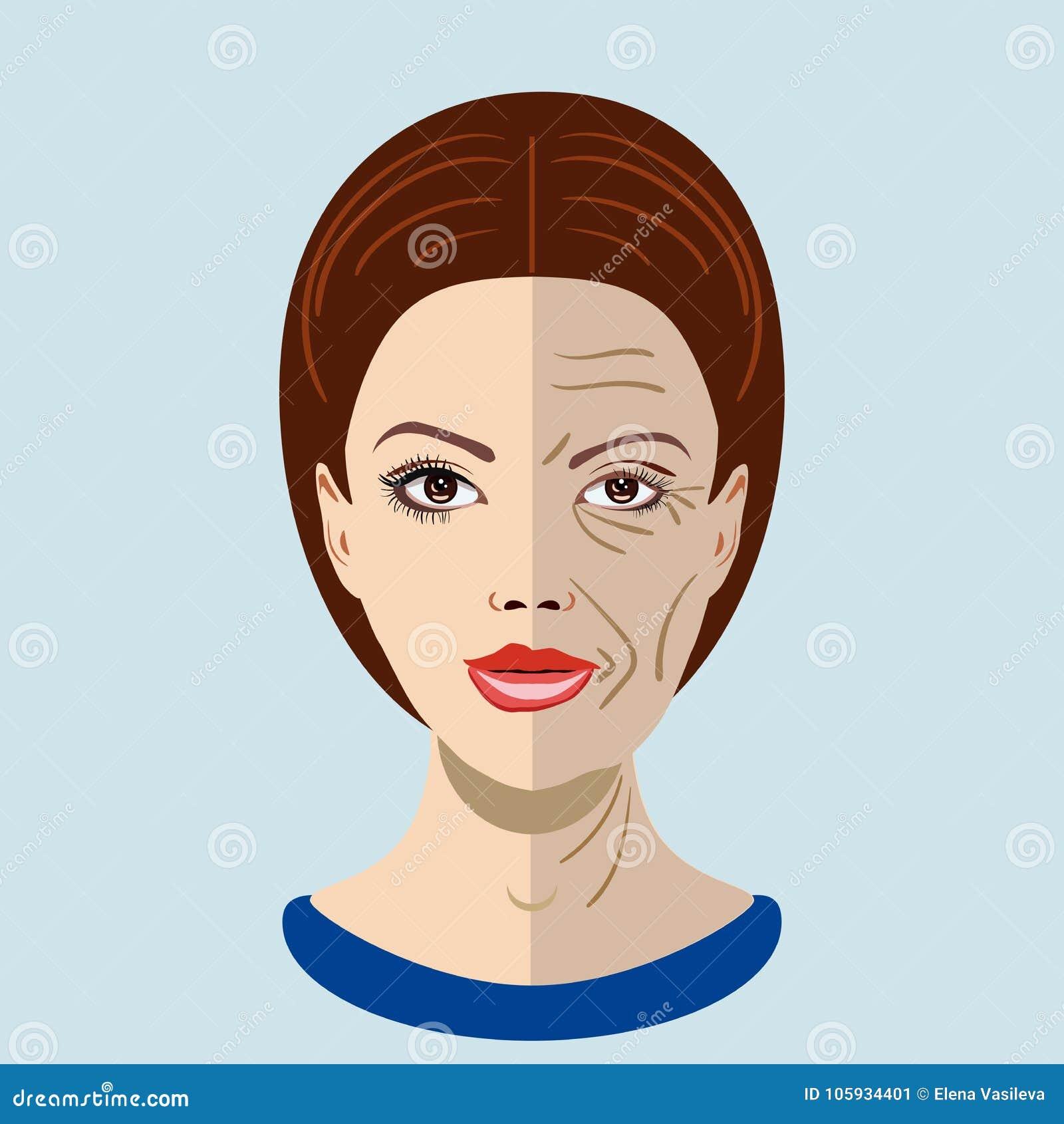 Διανυσματική διαδικασία γήρανσης, πρόσωπο με δύο τύπους δερμάτων, νέος και παλαιός