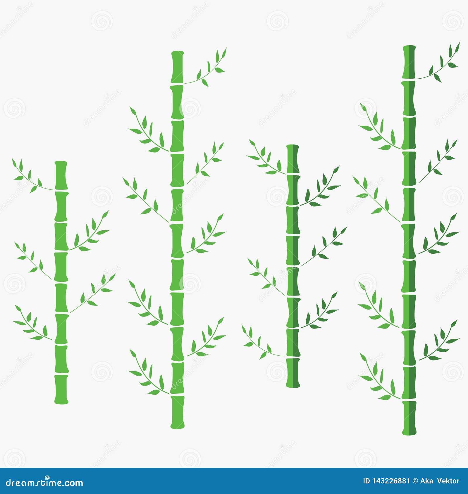 Διανυσματική επίπεδη απεικόνιση μπαμπού πράσινο ασιατικό κινεζικό μπαμπού το μπαμπού ανασκόπησης απ&omicro