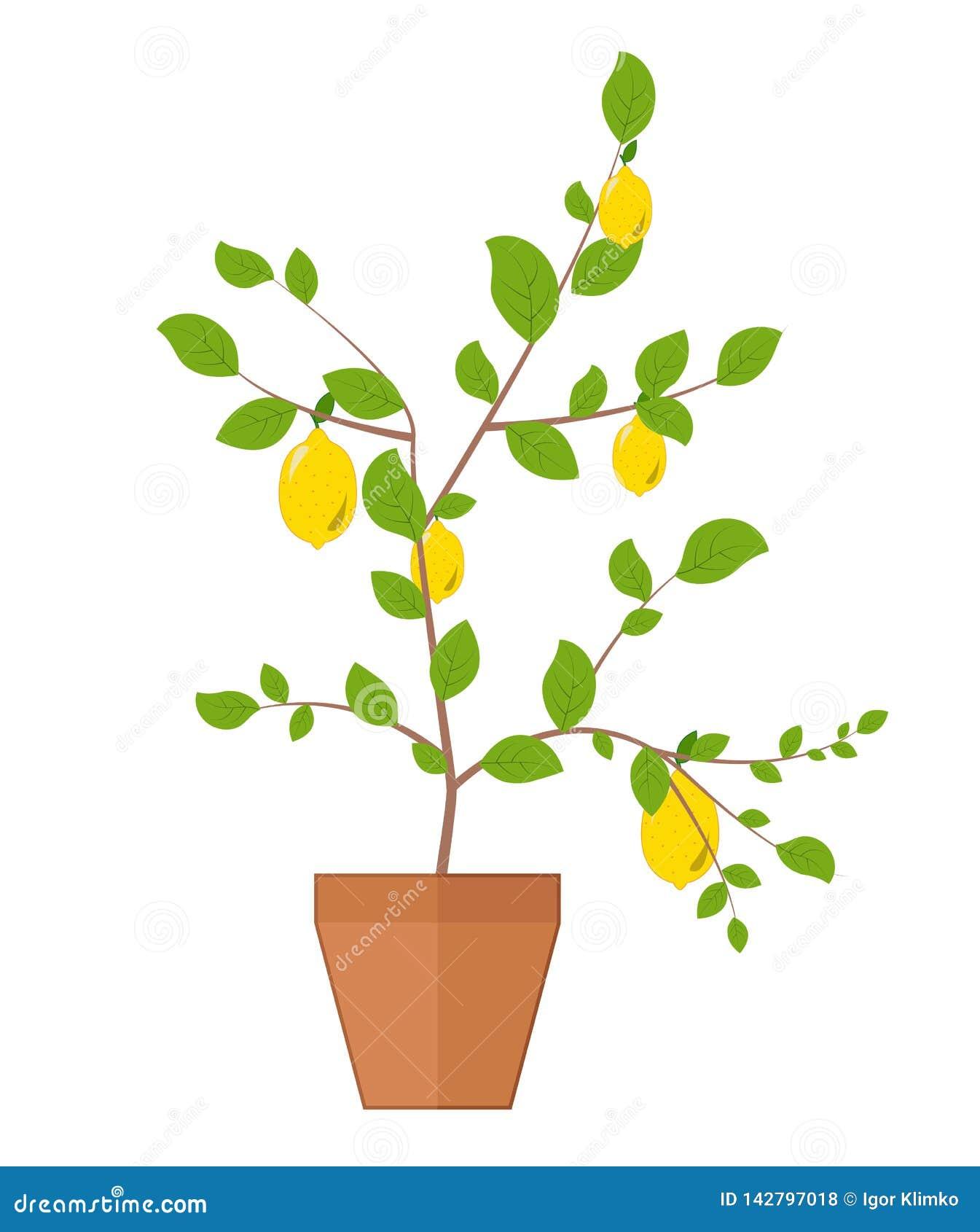 Διανυσματική οριζόντια απομονωμένη απεικόνιση ενός δέντρου λεμονιών