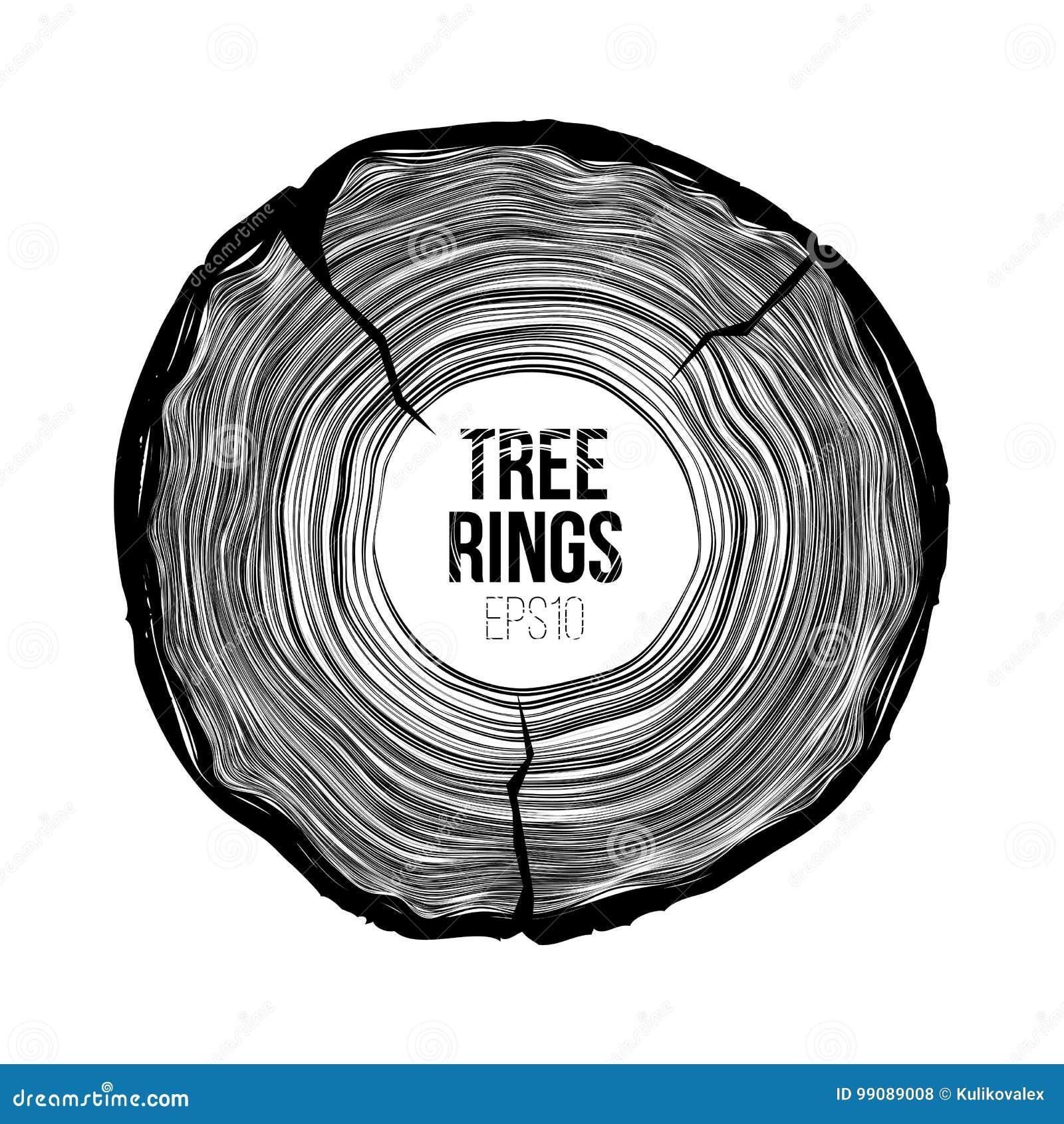 Διανυσματική φέτα δαχτυλιδιών δέντρων με τη ρωγμή Ετήσια σύσταση ζωής Woodgrain σχέδιο