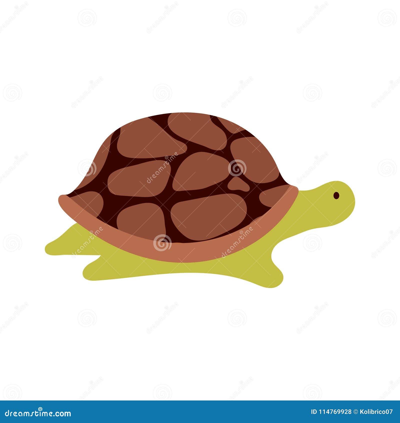 Διανυσματική χελώνα κινούμενων σχεδίων