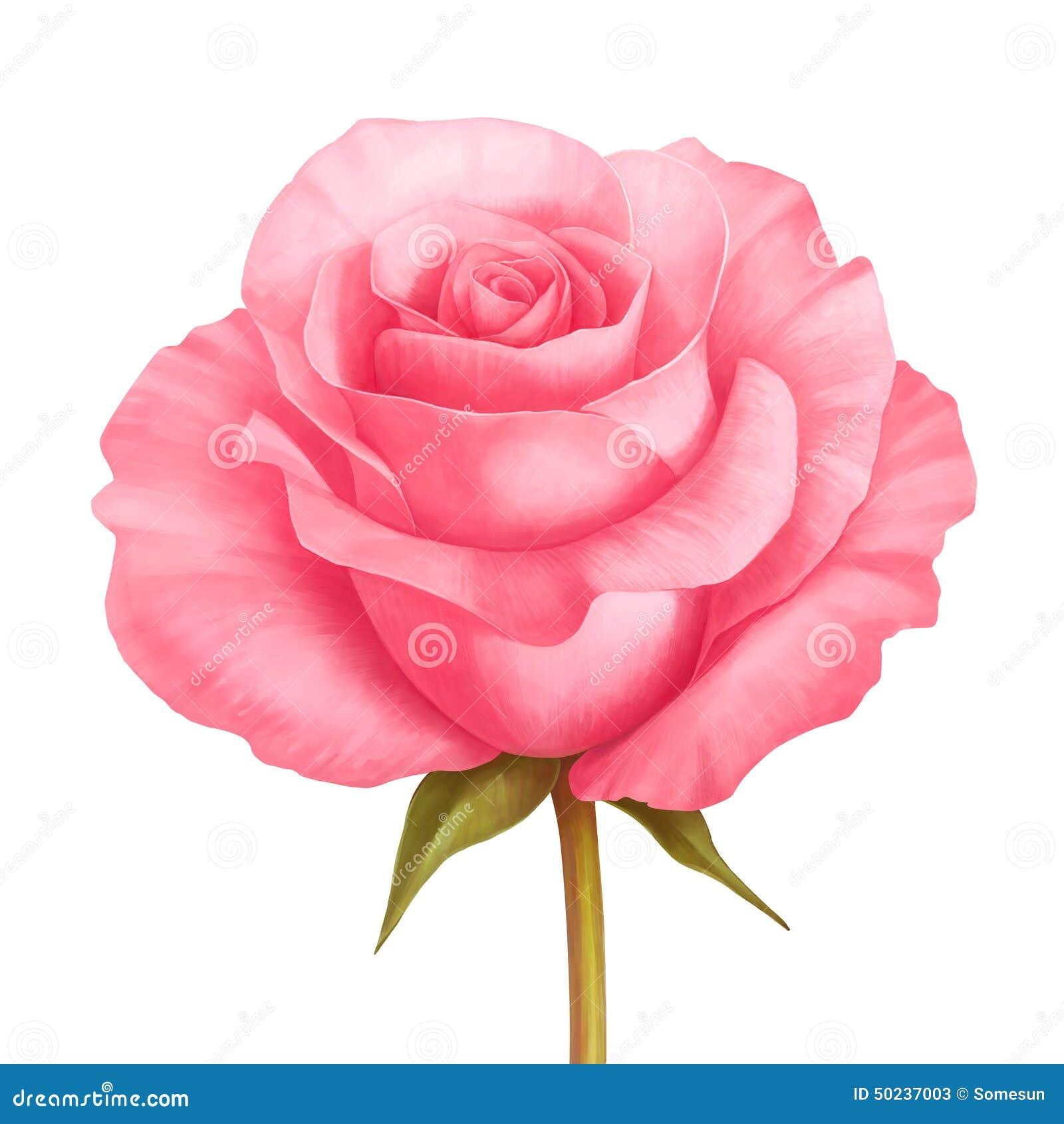 Διανυσματικός αυξήθηκε ρόδινη απεικόνιση λουλουδιών που απομονώθηκε στο λευκό