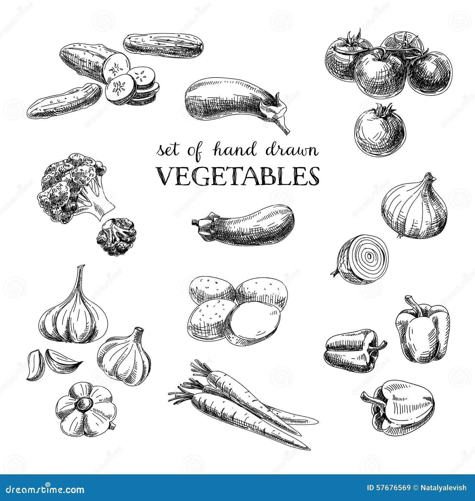Διανυσματικό συρμένο χέρι φυτικό σύνολο σκίτσων Τρόφιμα Eco