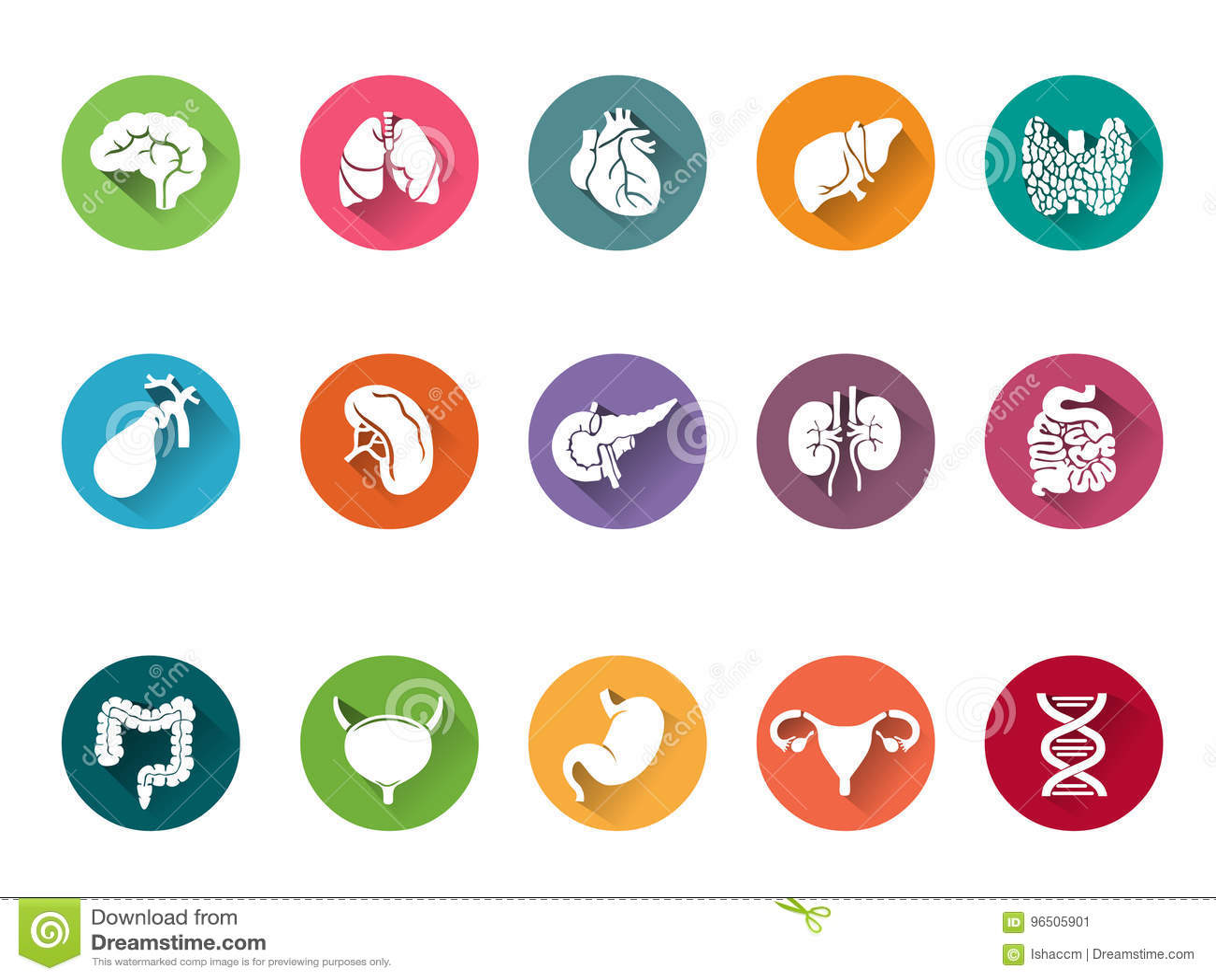 Διανυσματικό σύνολο εικονιδίων ανθρώπινων εσωτερικών οργάνων