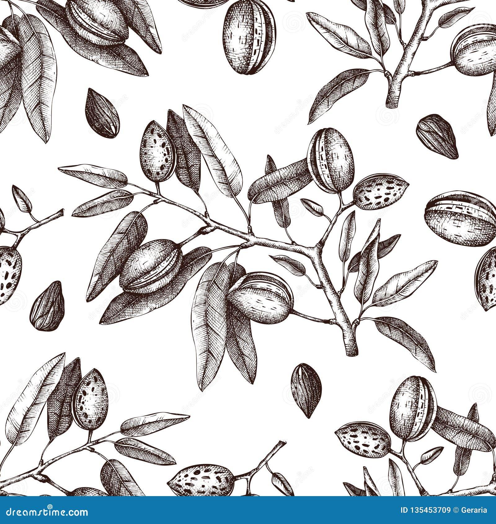 Διανυσματικό υπόβαθρο αμυγδάλων Συρμένο χέρι σκίτσο δέντρων καρυδιών βοτανικό πρότυπο άνευ ραφή&sig Εκλεκτής ποιότητας τονωτικό σ