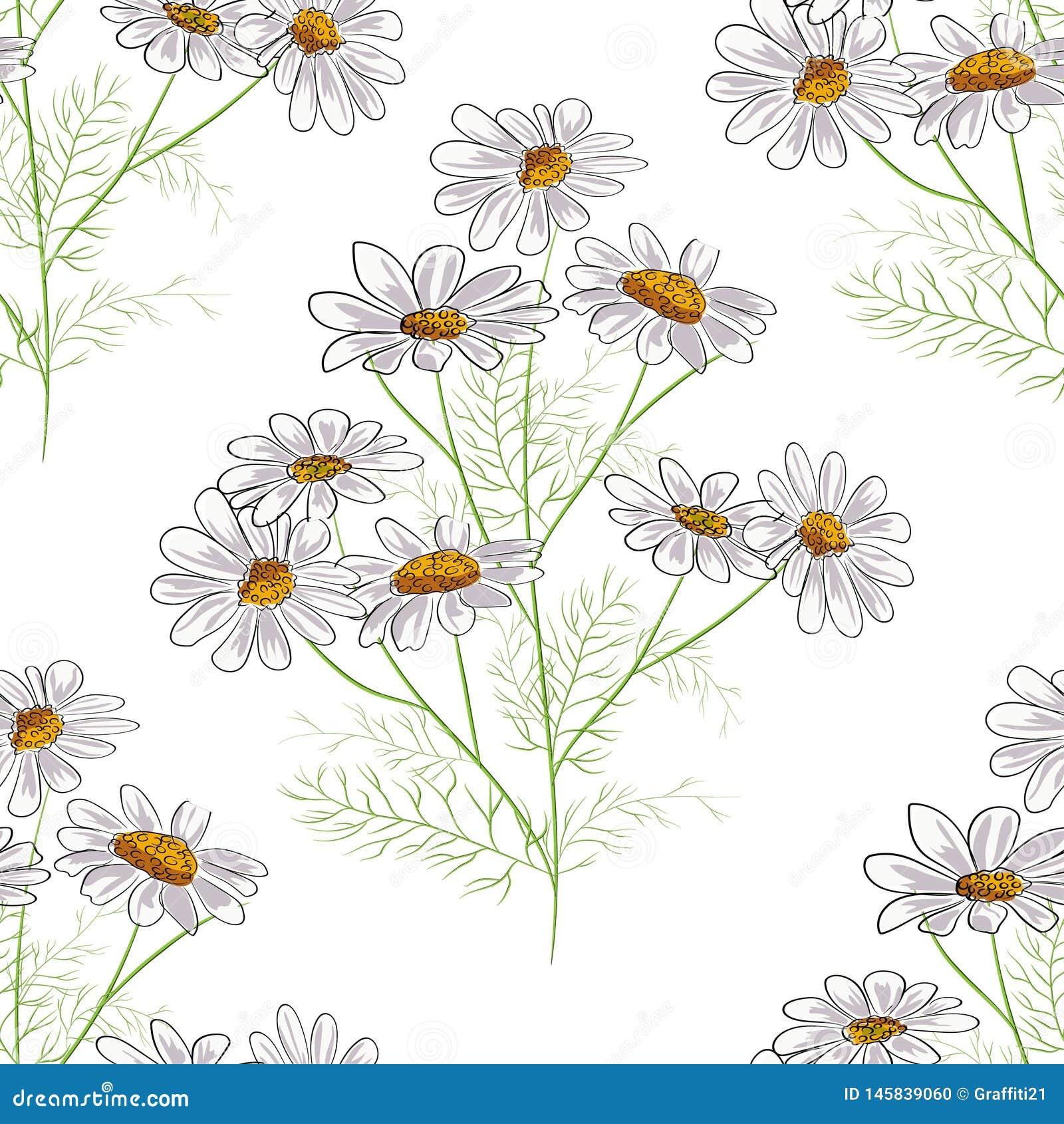 Διανυσματικό floral άνευ ραφής σχέδιο με τα θερινά κίτρινα χορτάρια και τα chamomile camomile λουλούδια