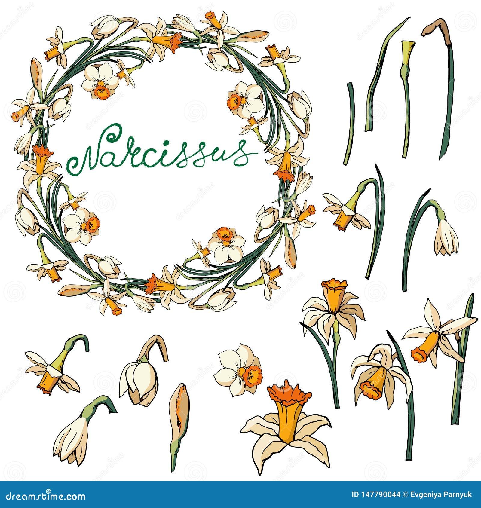 Διανυσματικό floral πλαίσιο με τα daffodils