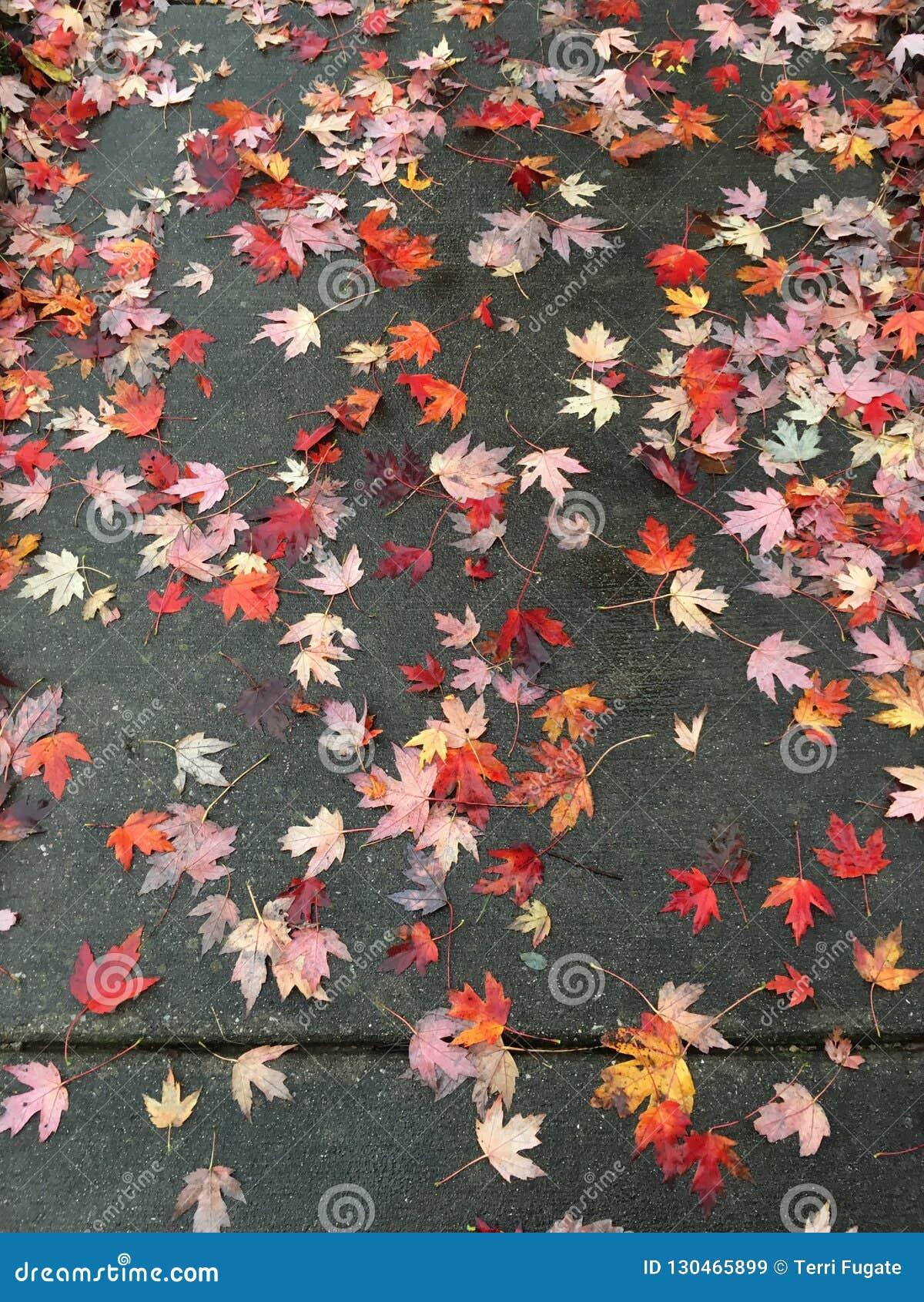 Διεσπαρμένα φύλλα πεζοδρομίων