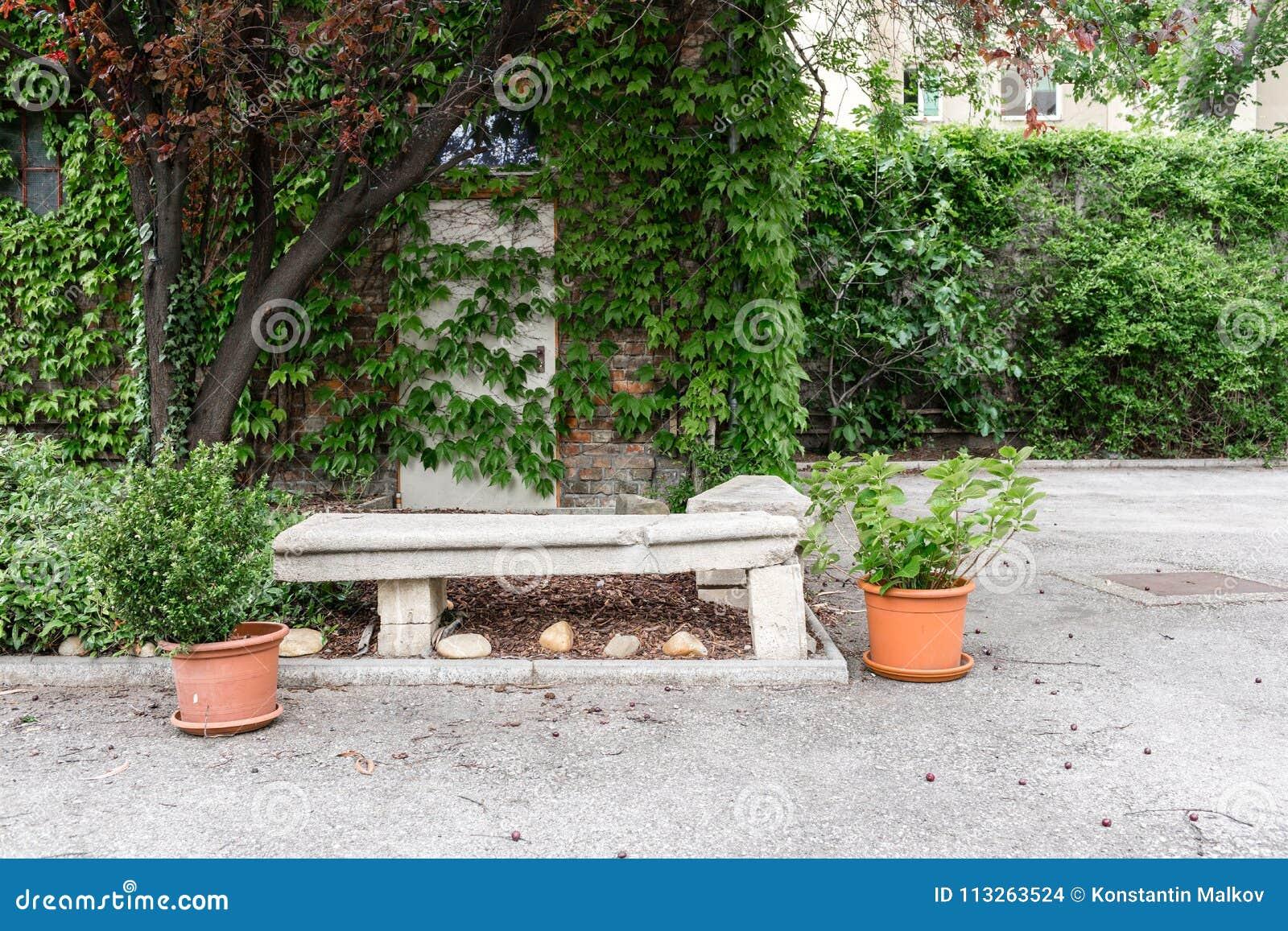 δοχεία πράσινων φυτών Υπαίθριος στο θερινό patio Μικρός townhouse αιώνιος θερινός κήπος Αυστρία Βιέννη