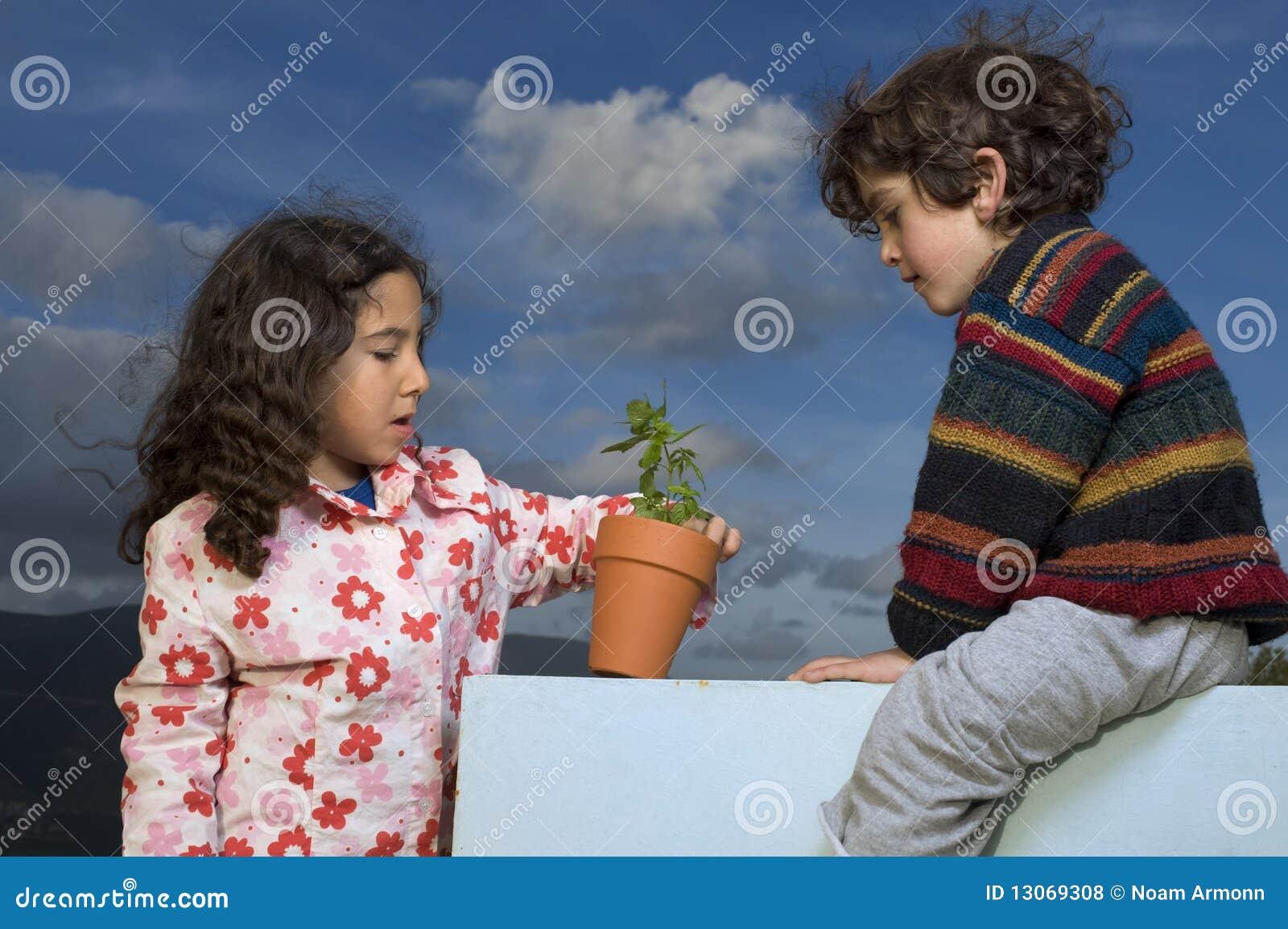 δοχείο δύο φυτών κατσικιώ