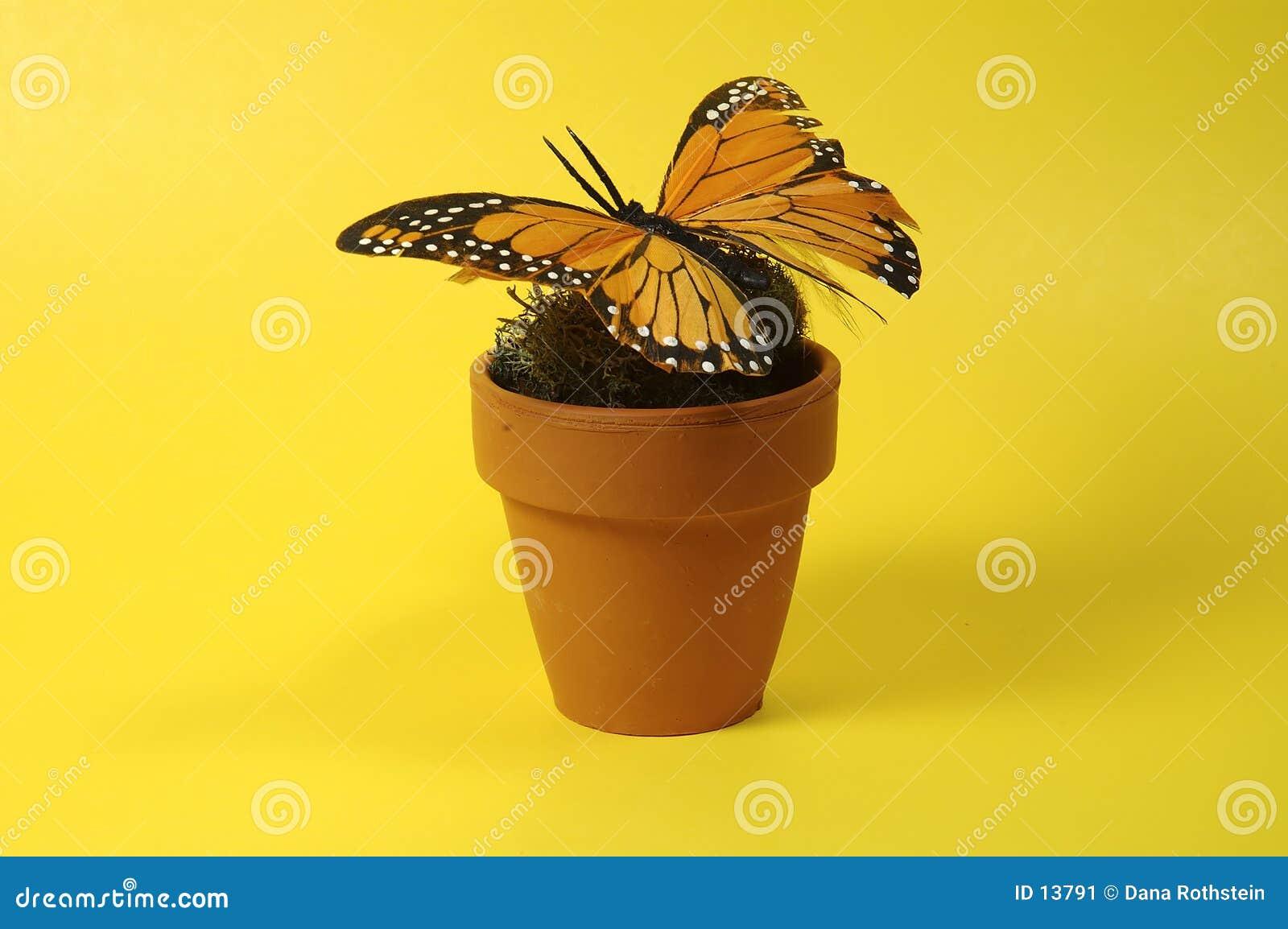 δοχείο πεταλούδων