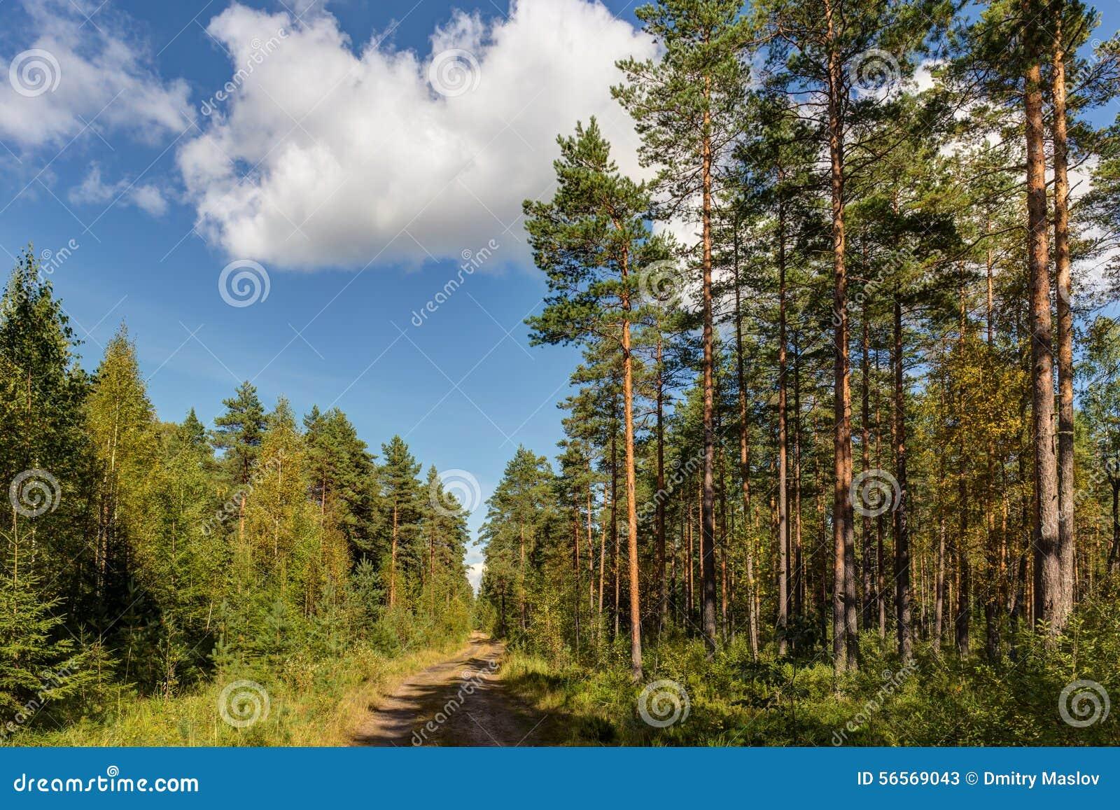 Download Δρόμος σε ένα ηλιόλουστο δάσος Στοκ Εικόνα - εικόνα από υπαίθρια, φύλλωμα: 56569043