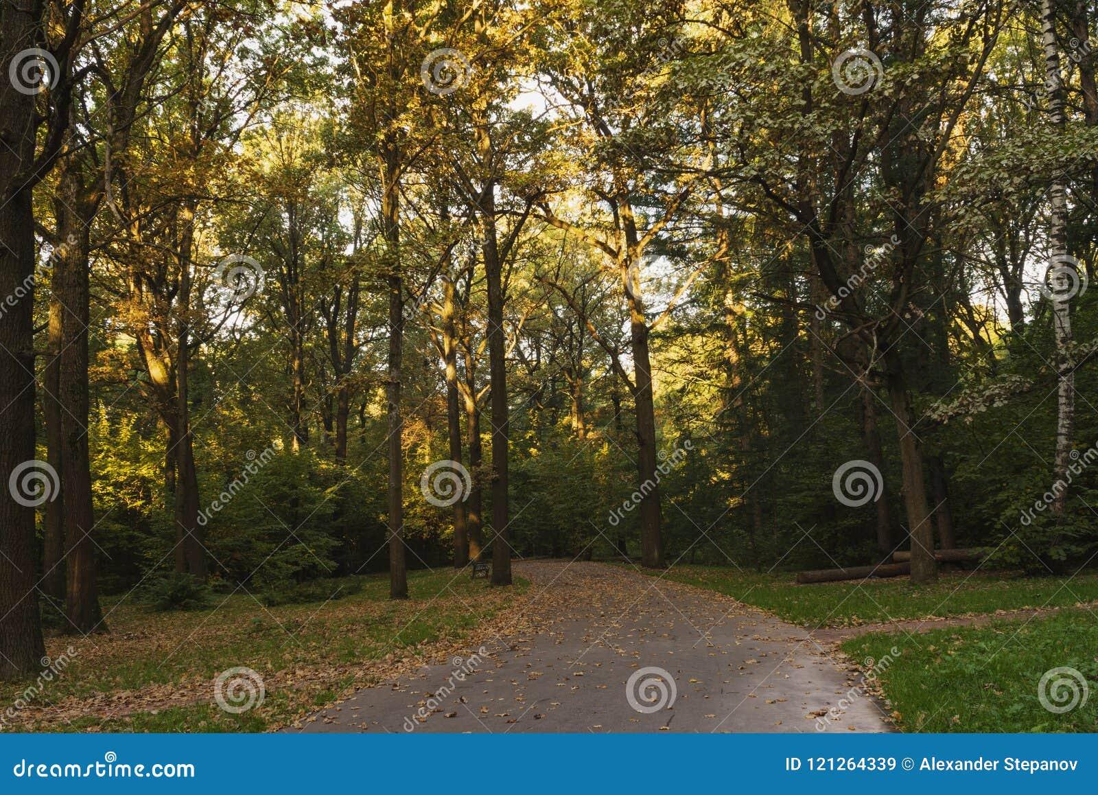 Δρόμος σε ένα σκιερό πάρκο φθινοπώρου