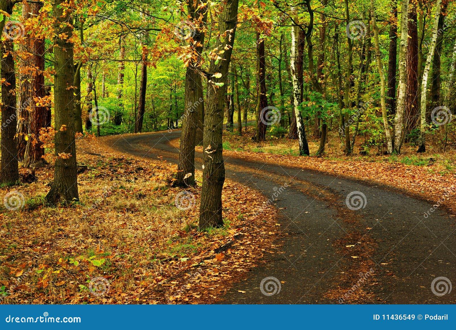δρόμος φθινοπώρου