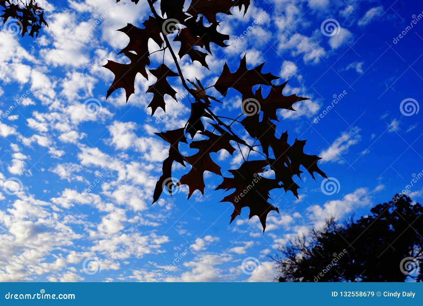 Δρύινα φύλλα σε ένα δέντρο ενάντια στο μπλε ουρανό