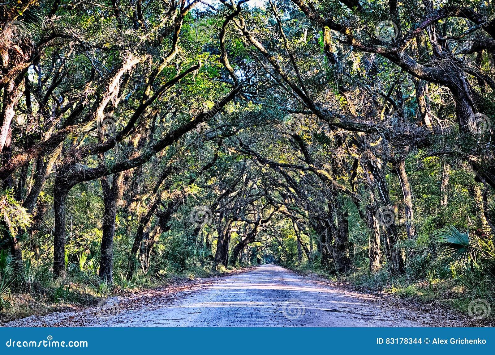 Δρύινα WI σηράγγων δέντρων απόκοσμου έλους βρώμικων δρόμων φυτειών κόλπων βοτανικής