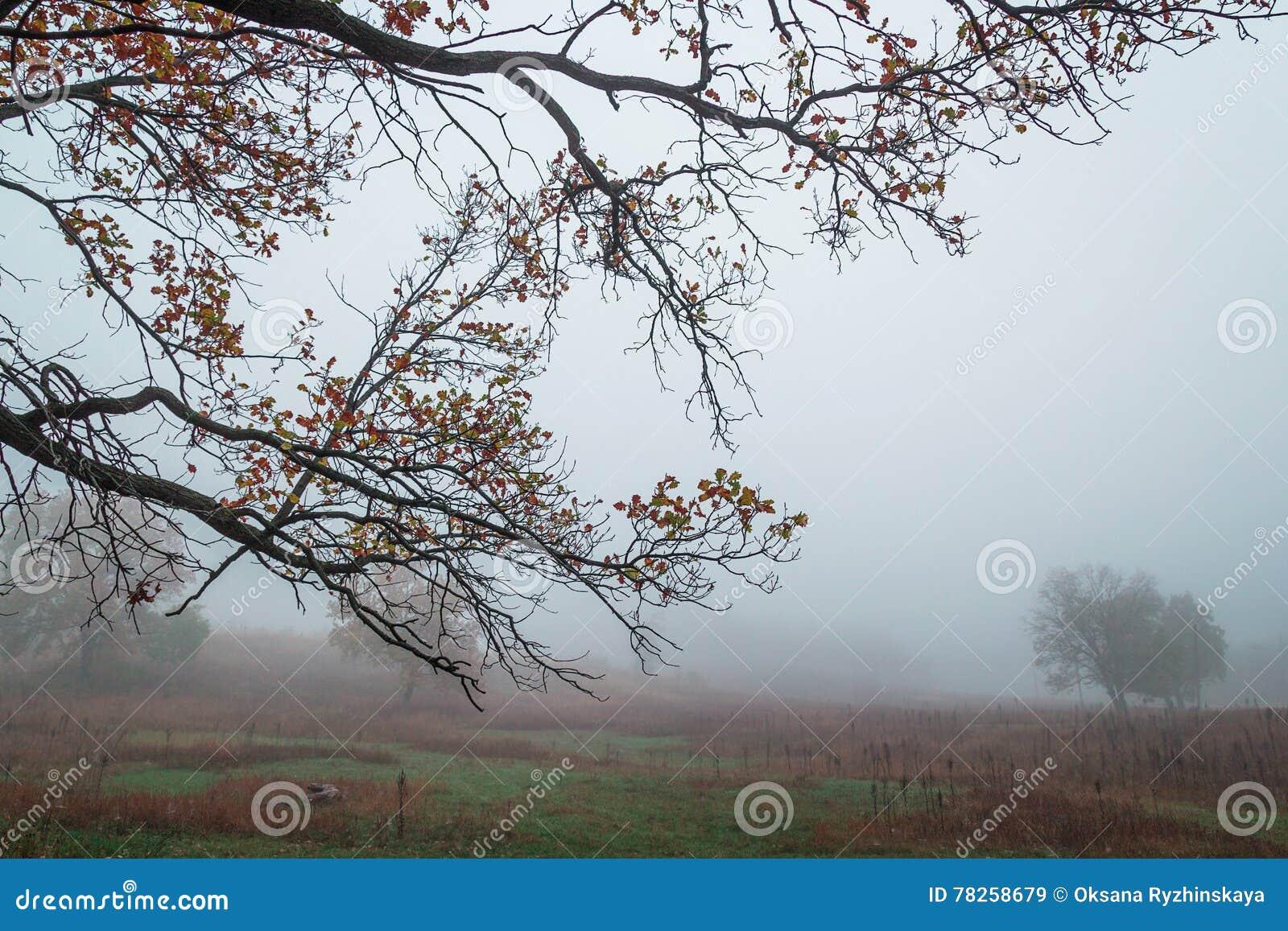 Δρύινοι κλάδοι με τα κίτρινα φύλλα στο υπόβαθρο του misty λ